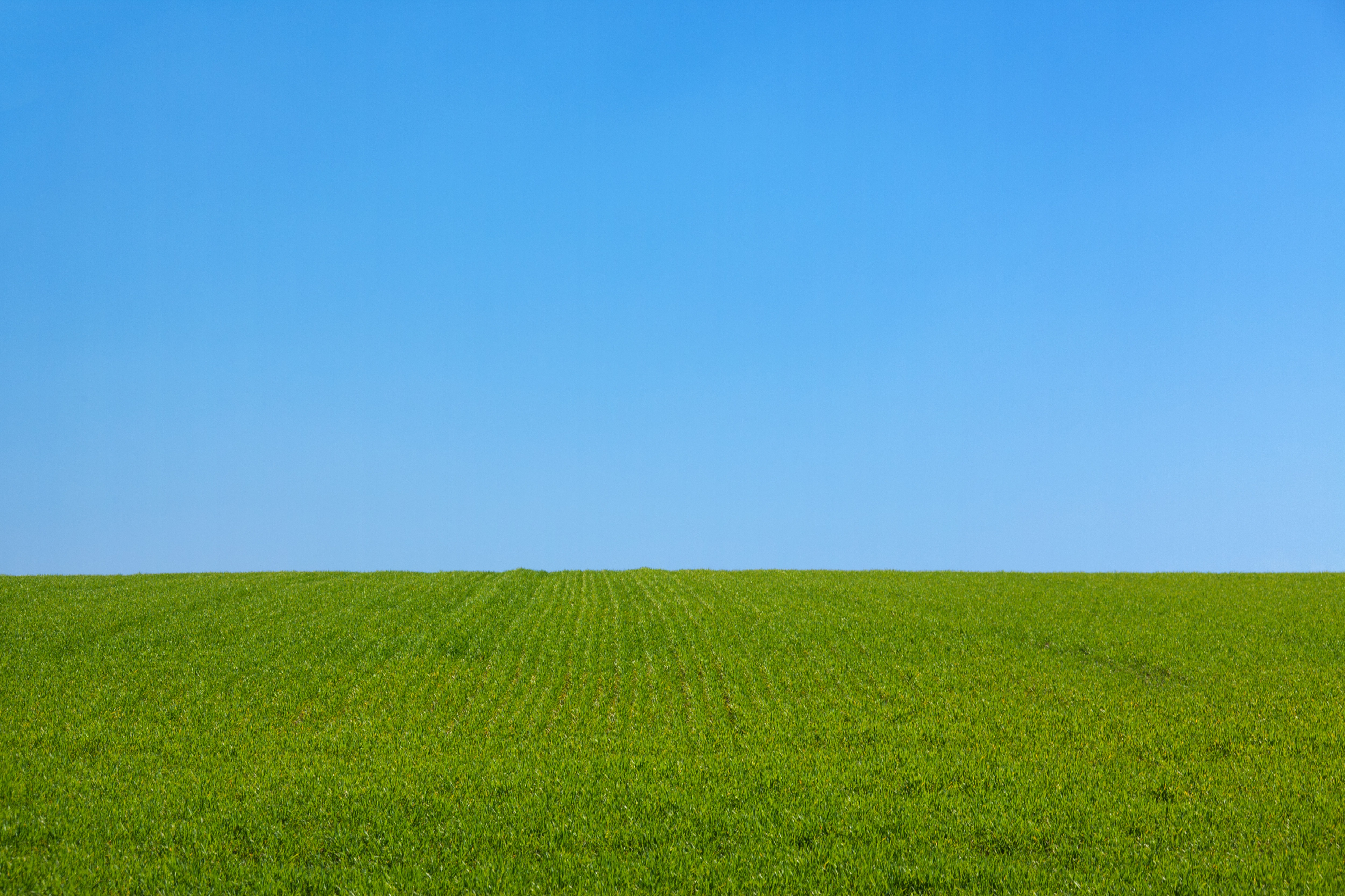 fields and grass - photo #5