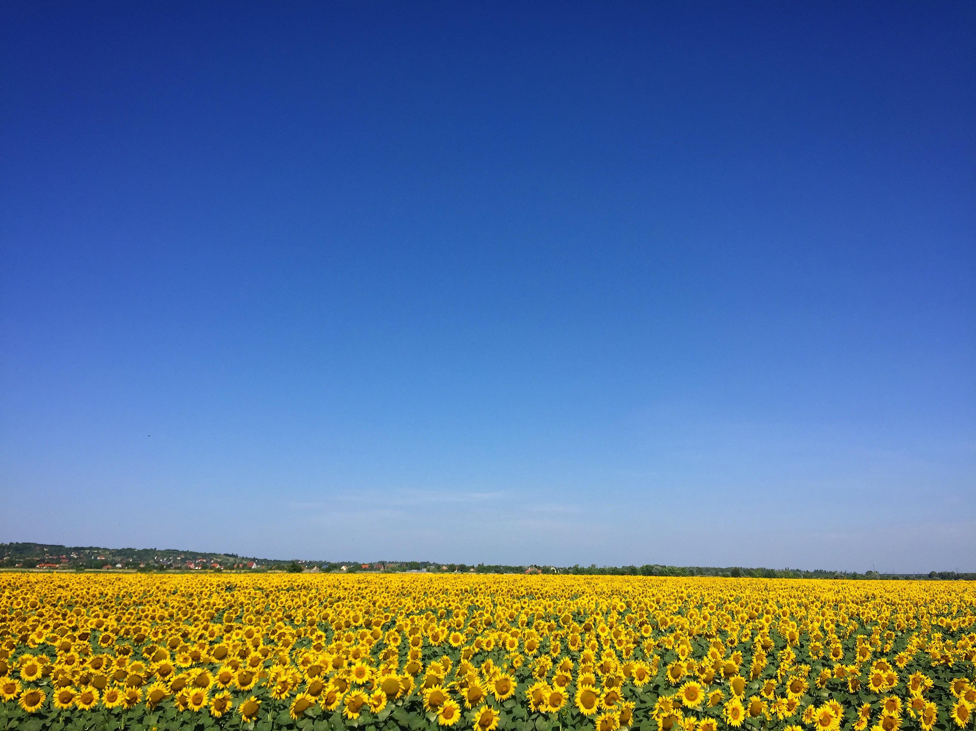 blue sky free photos stock images   freephotos cc