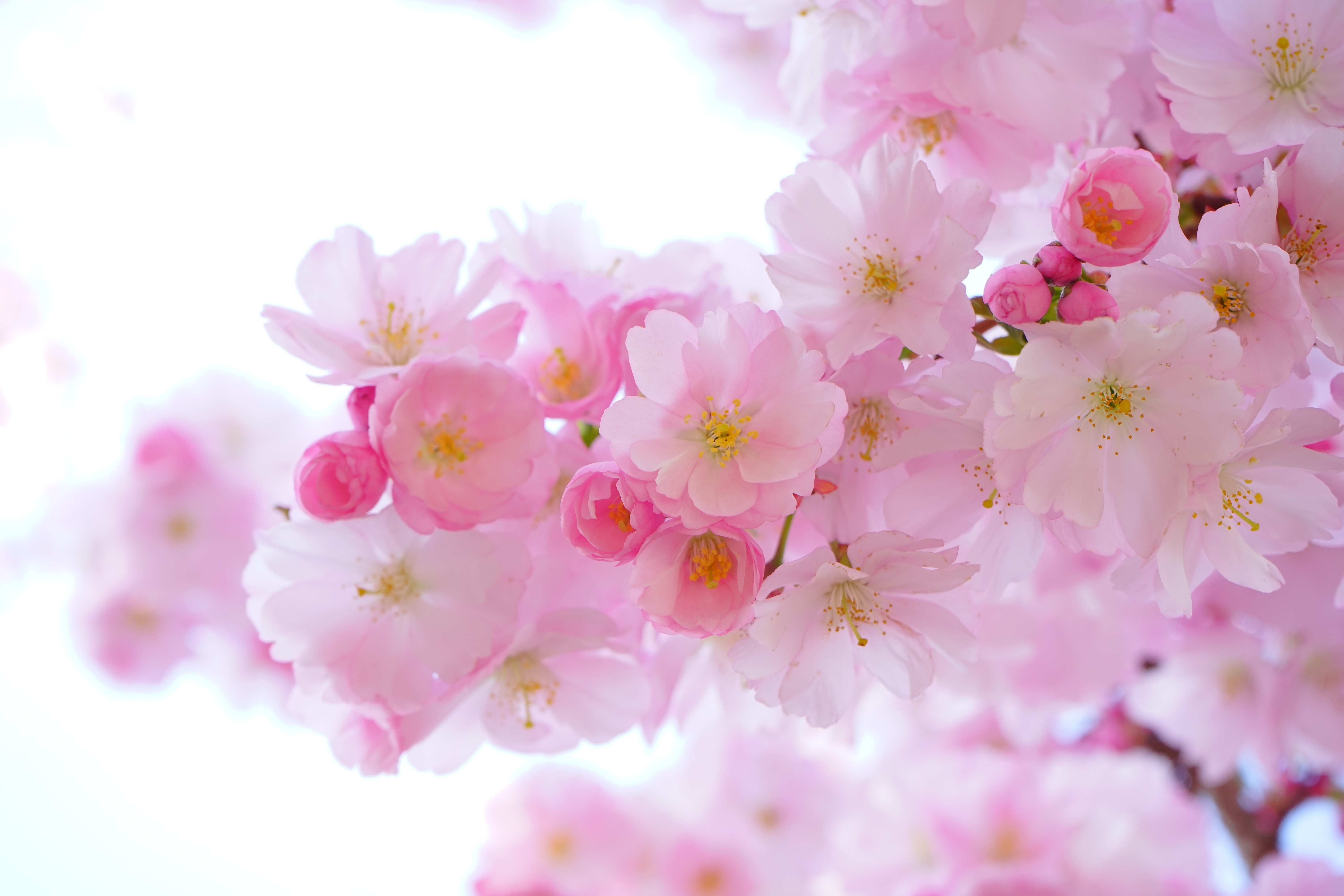 Pink, Flowers - Free images on Pixabay