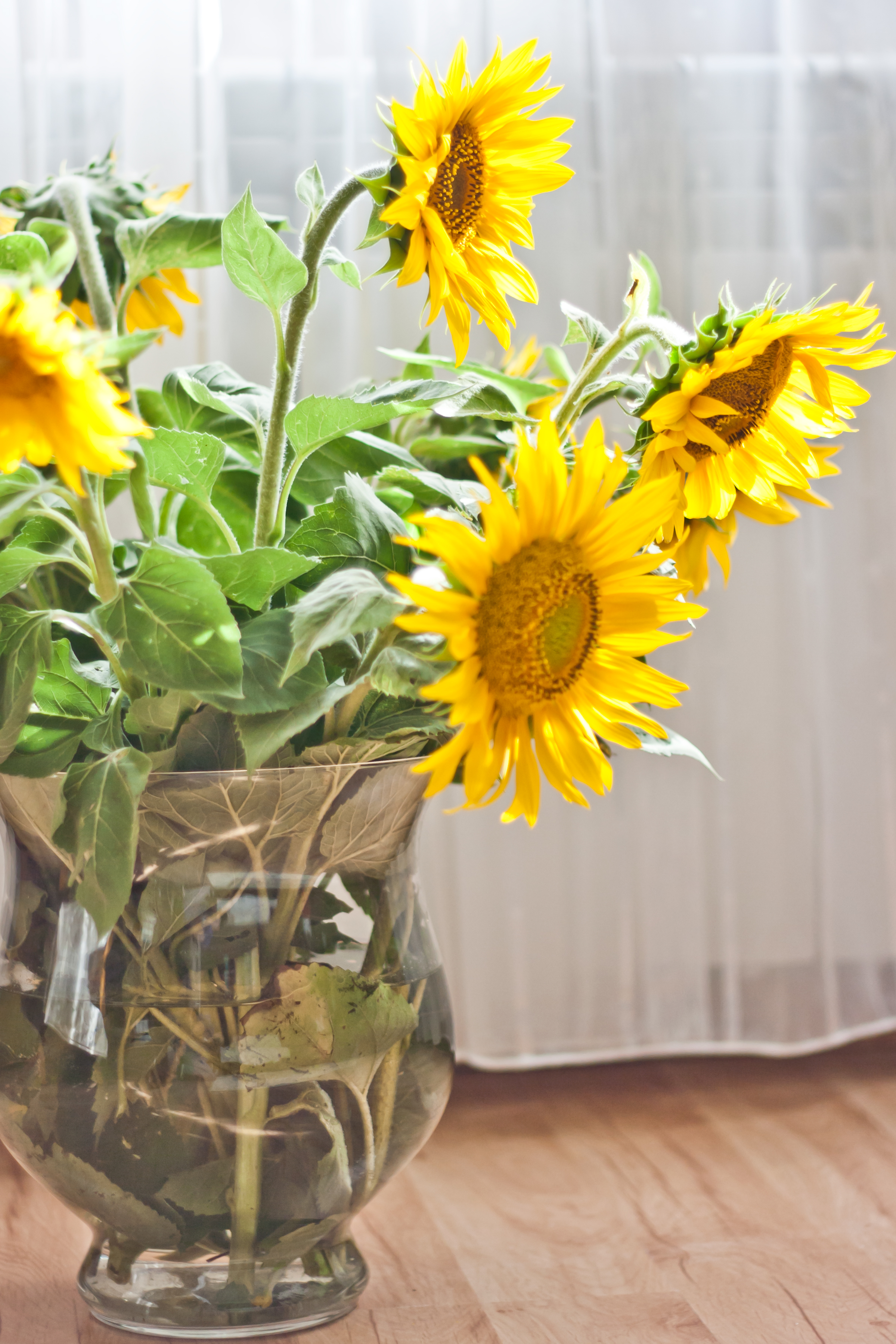 Sunflowers in a Vase · Free Stock Photo