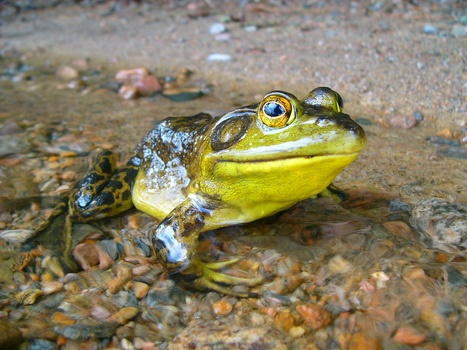 Brown and Yellow Frog on Brown Rocks