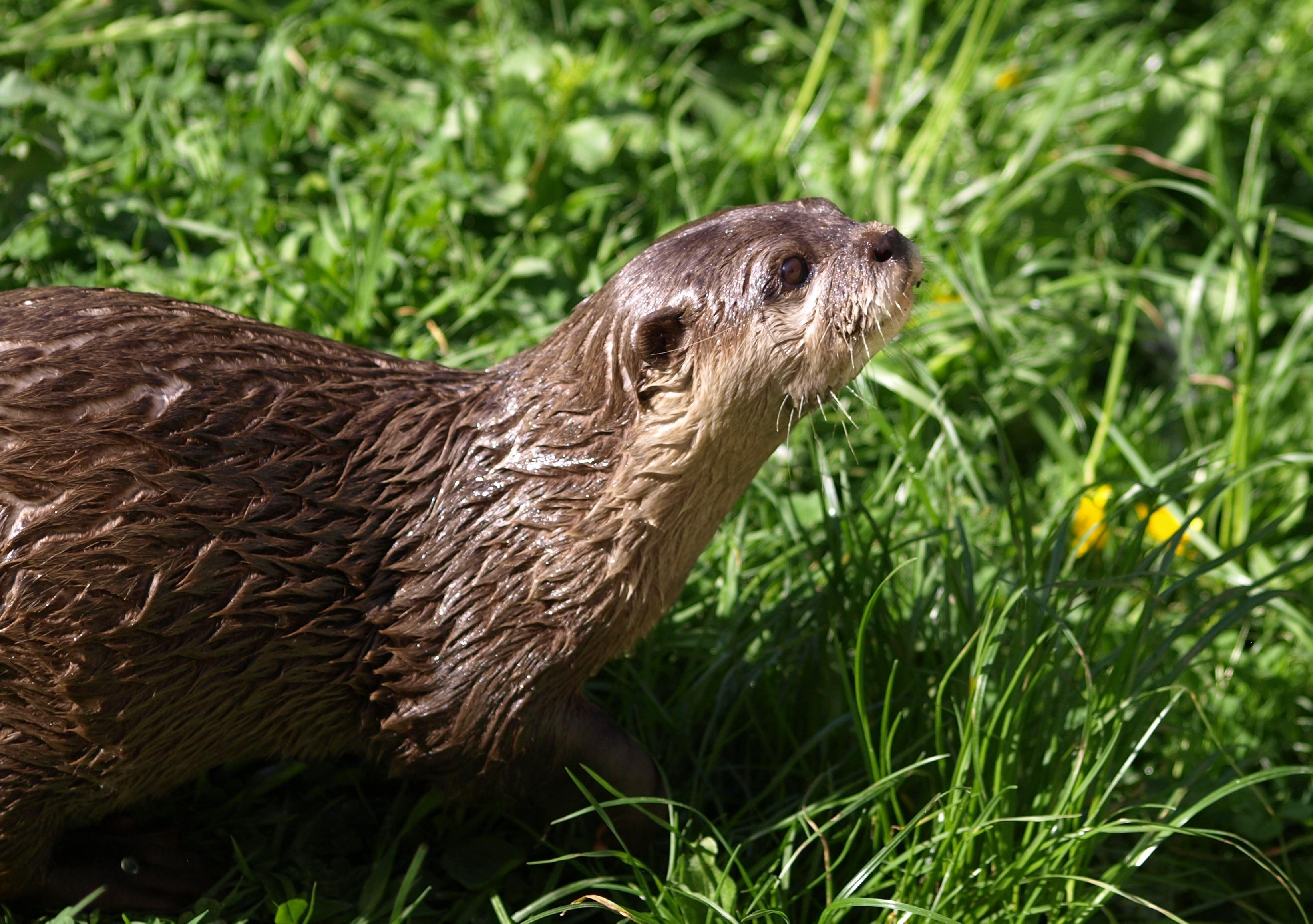 free stock photo of adorable animal animal photography