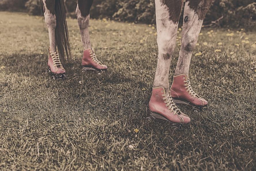 feet, legs, animal