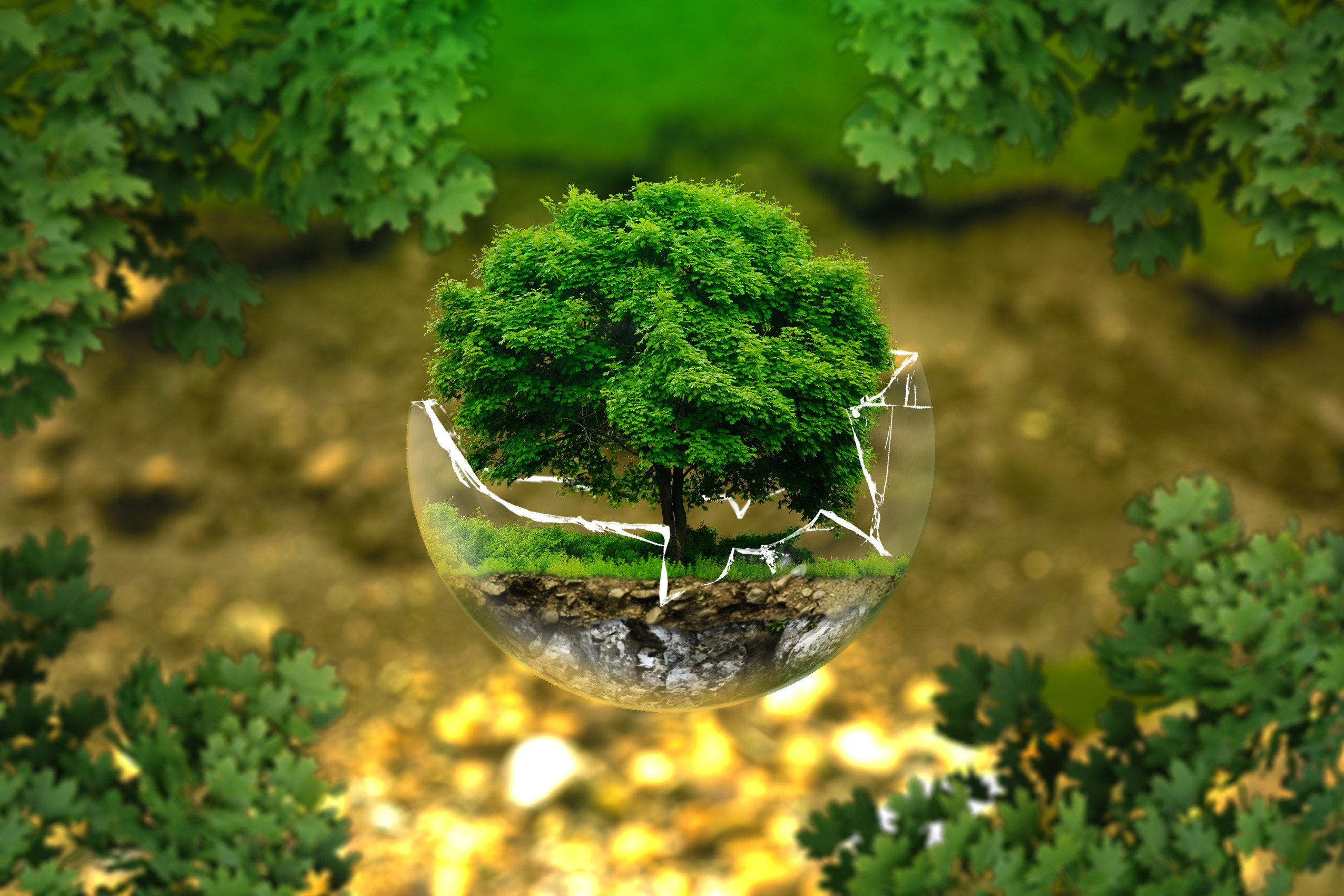 ecology organic pollution Define ecology: a branch of science concerned with the interrelationship of organisms and their environments — ecology in a sentence.