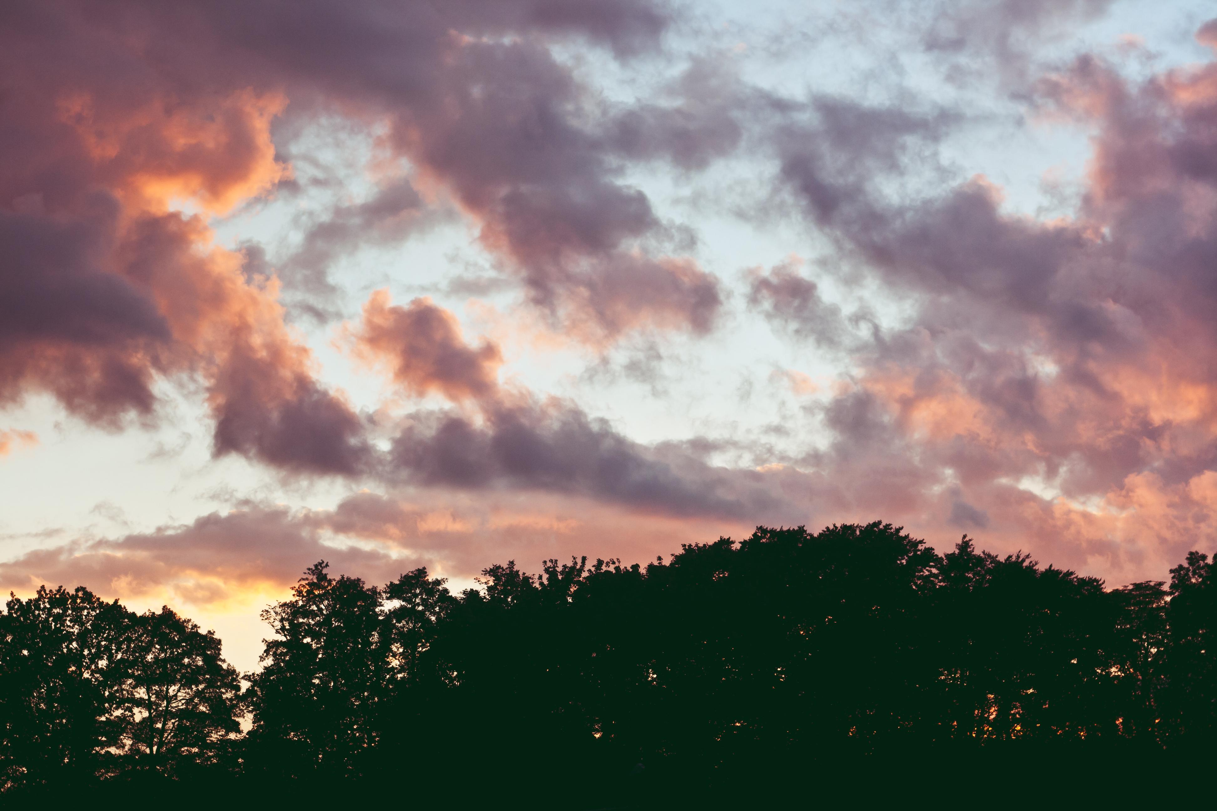 Free photo: Summer, Sunset, Trees, Evening - Free Image on Pixabay ...
