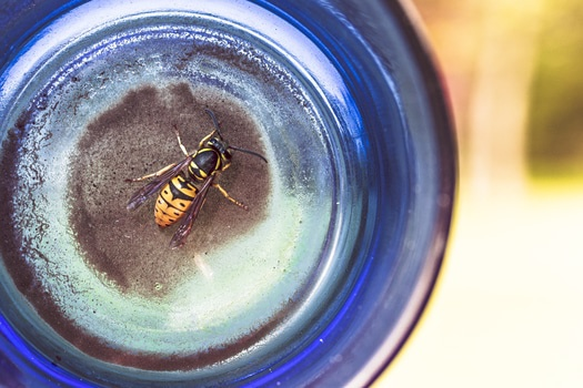 Free stock photo of animal, glass, insect, bottle