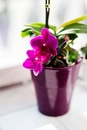 flower, home, orchid