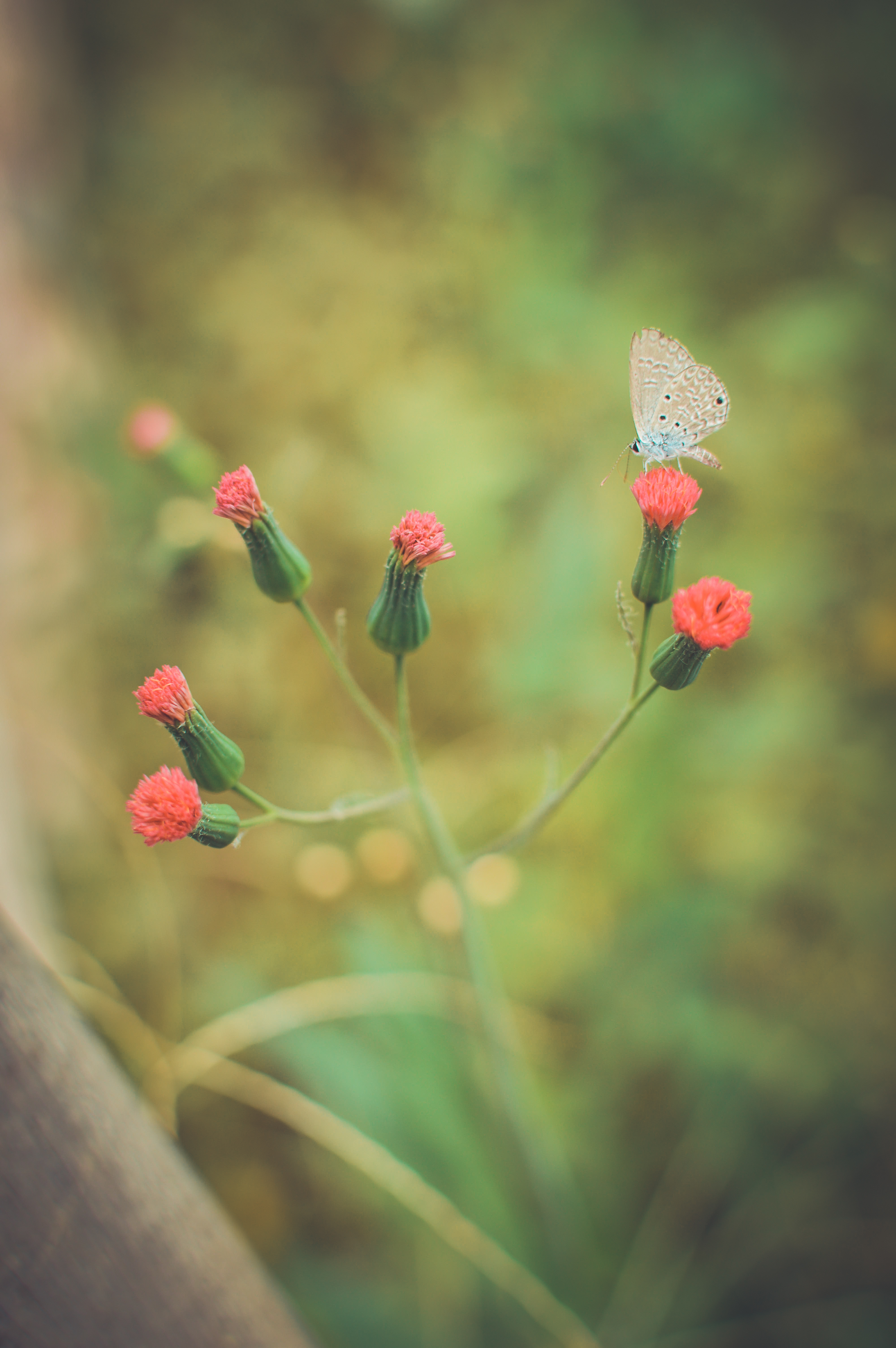 free stock photo of backyard blurred butterfly