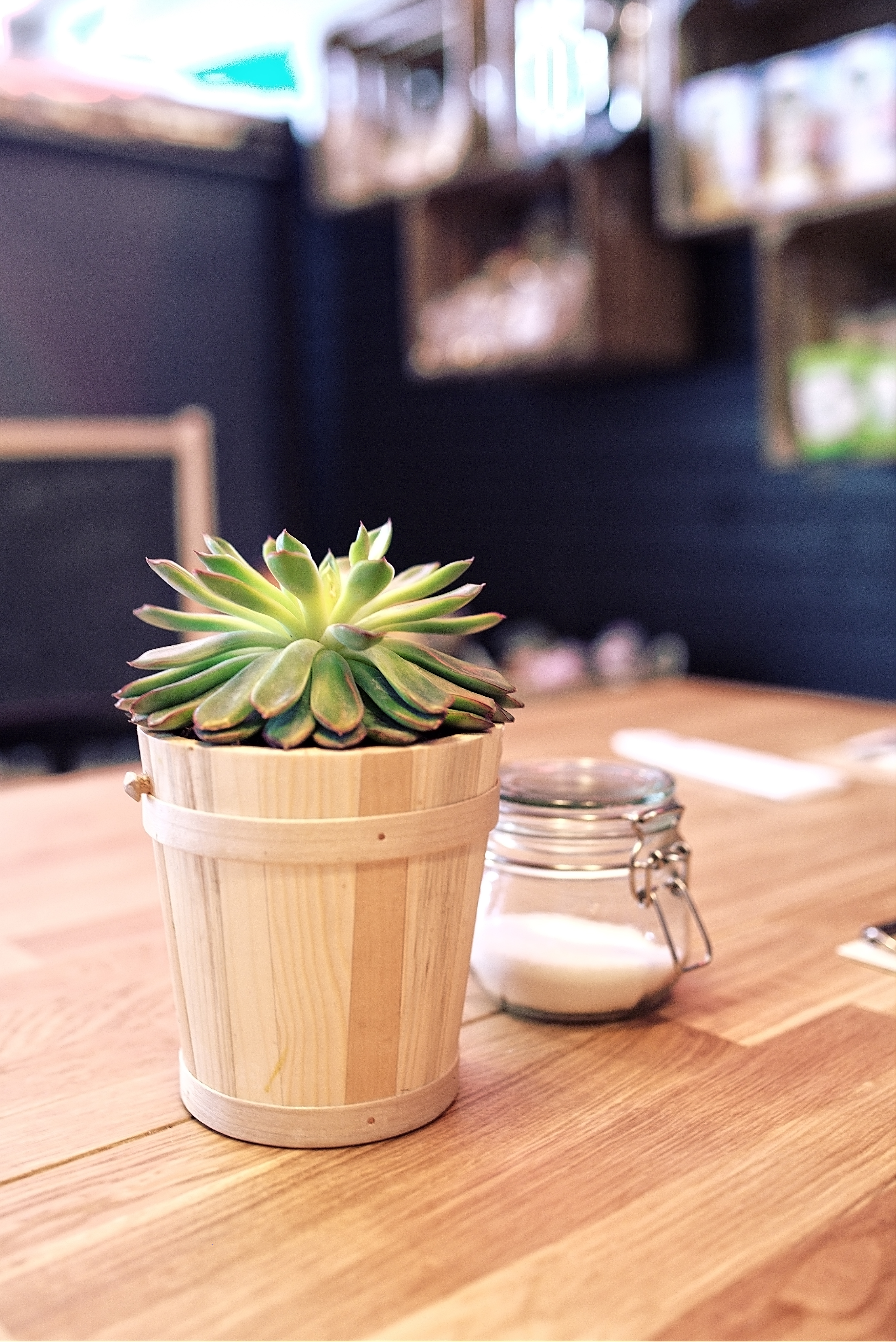 Plant On The Table 183 Free Stock Photo