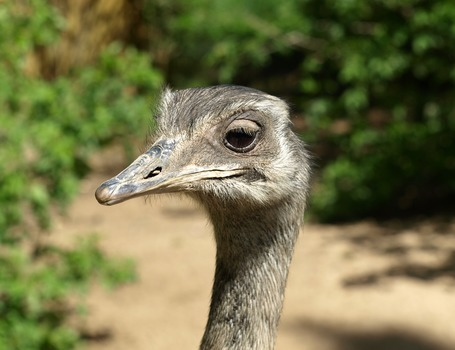 Grey Emu Beside Green Plants during Daytime