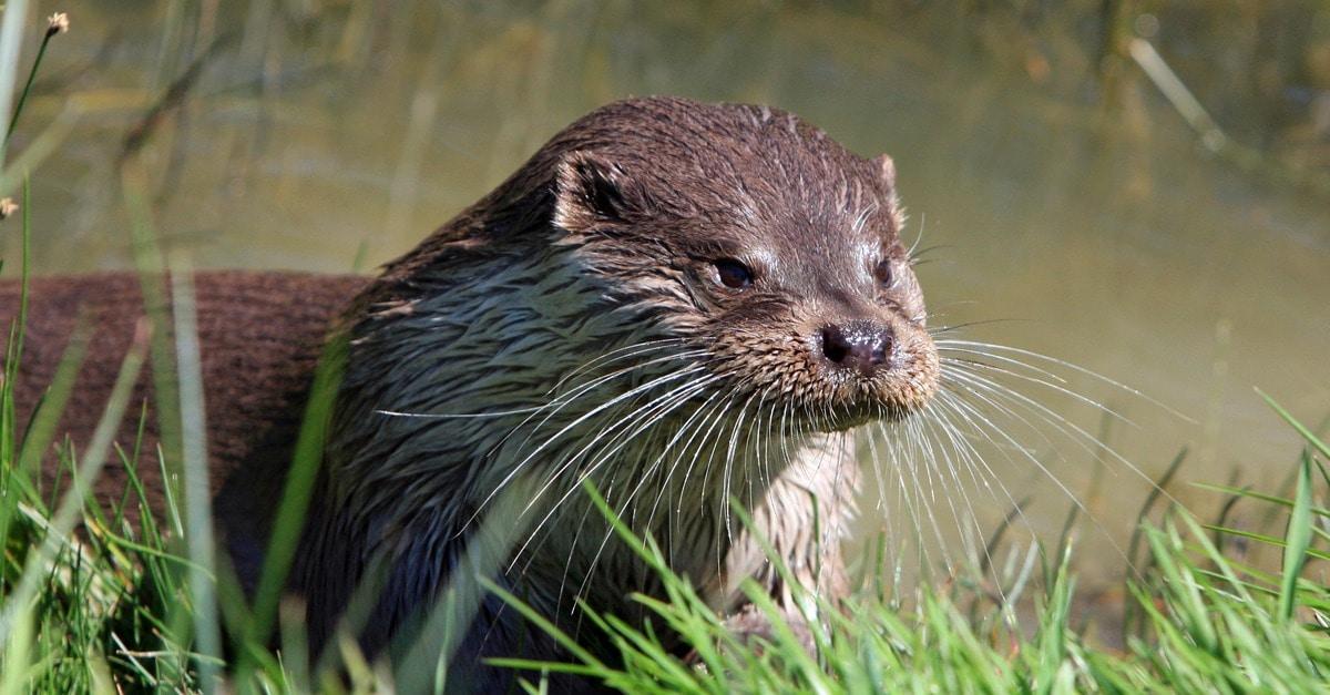 brown otter near green grass  u00b7 free stock photo