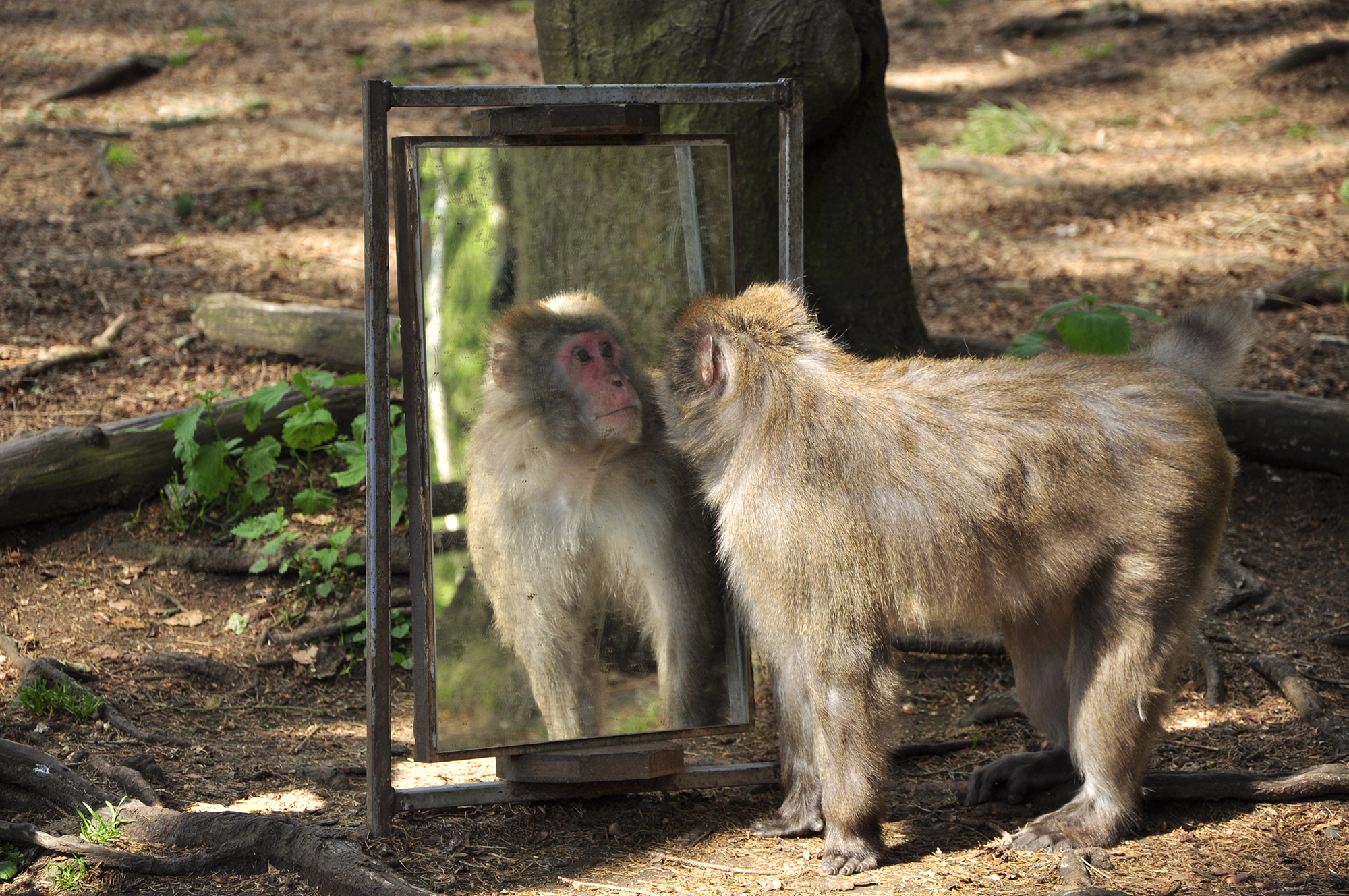 обезьянка и зеркало картинки делали