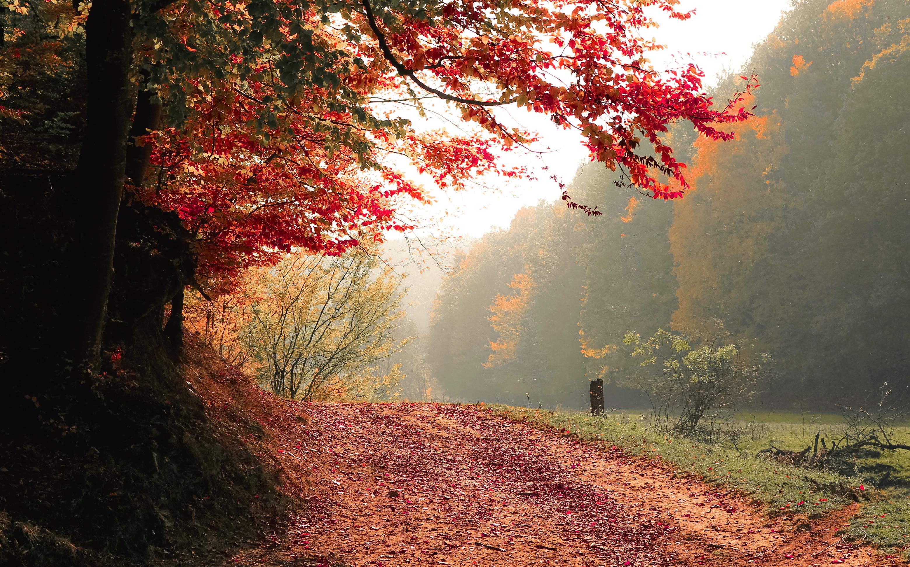 free stock photo of autumn  daylight  fall