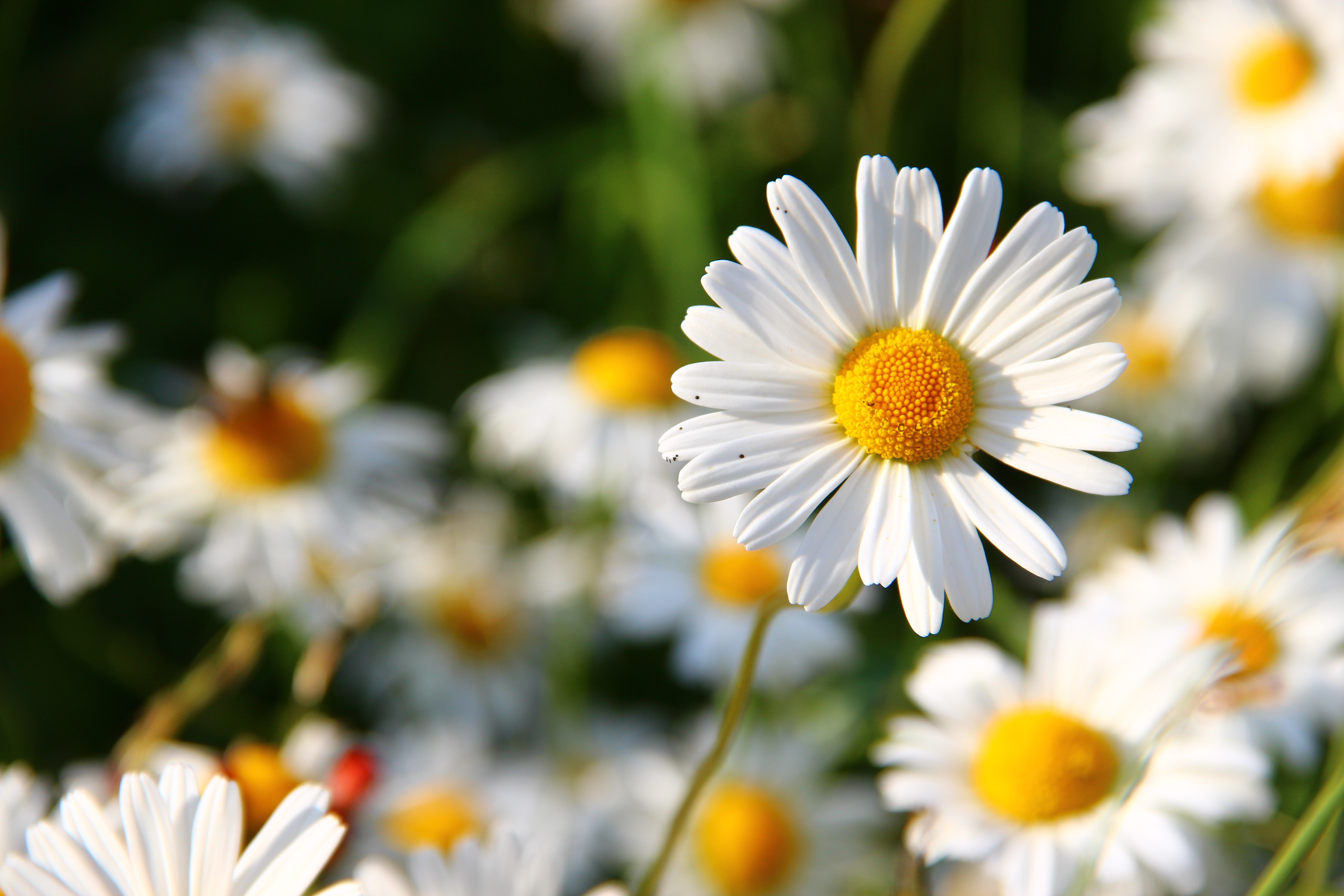 White And Yellow Flower View During Daytime Free Stock Photo