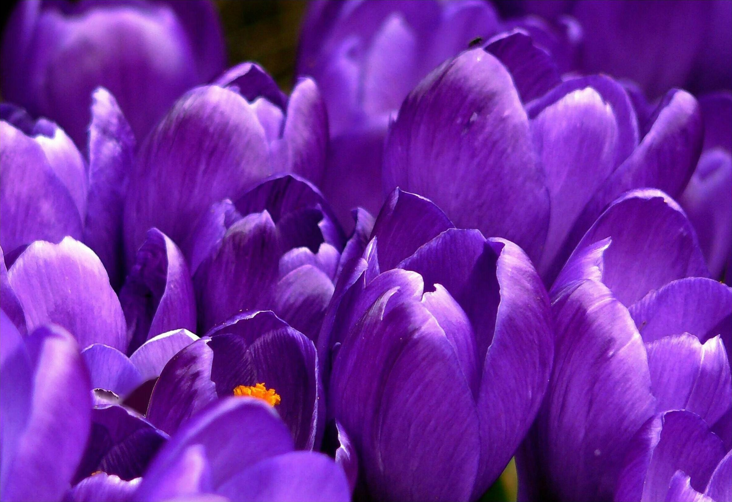 Close Up Photo Of Purple Clustered Flower 183 Free Stock Photo