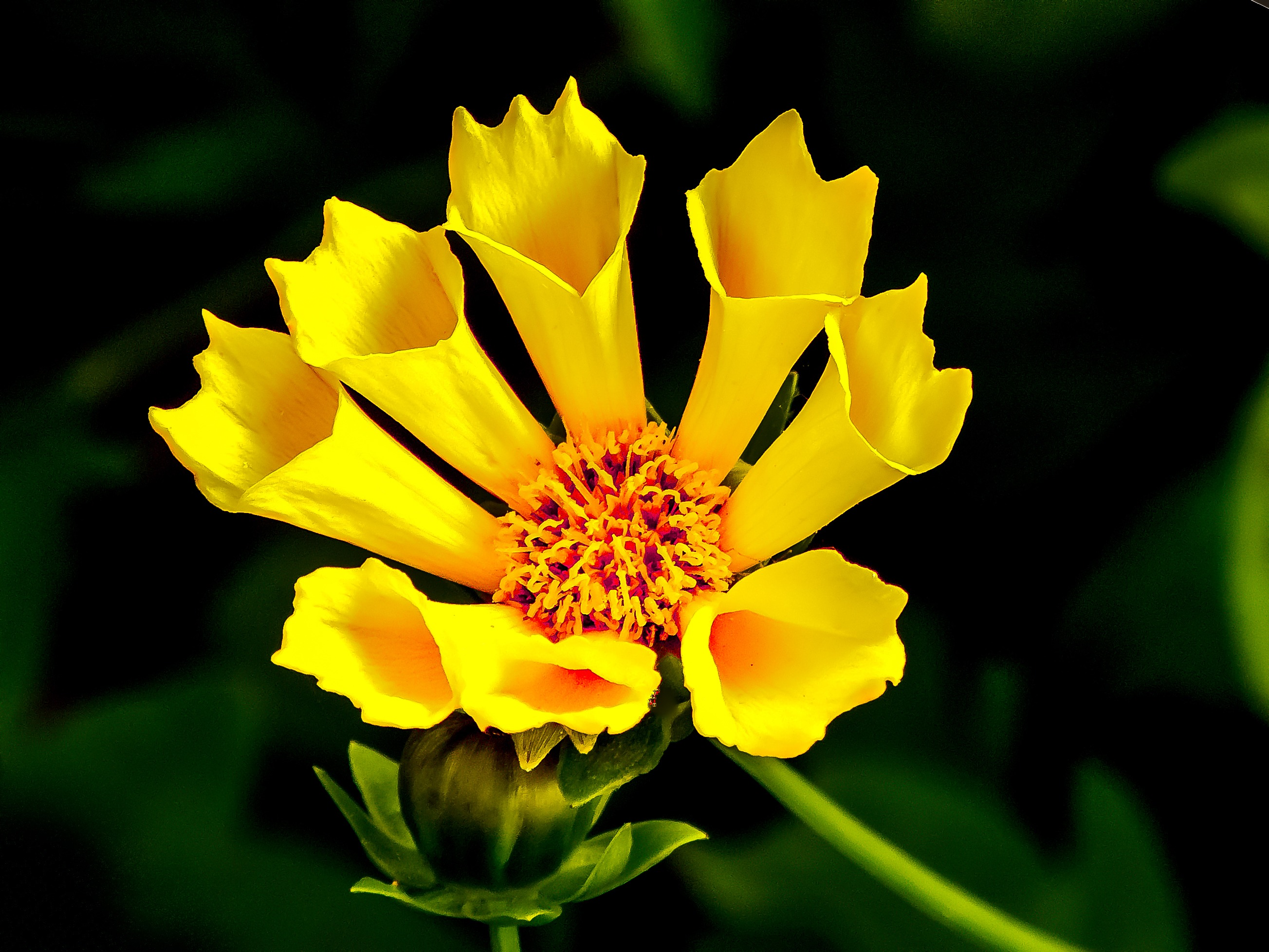 Yellow Flower in Macro Lens graphy · Free Stock