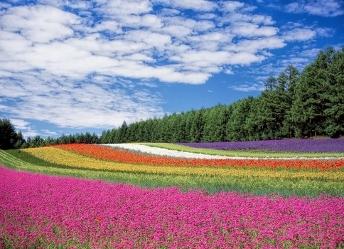 Red Yellow and Orange Flower Field