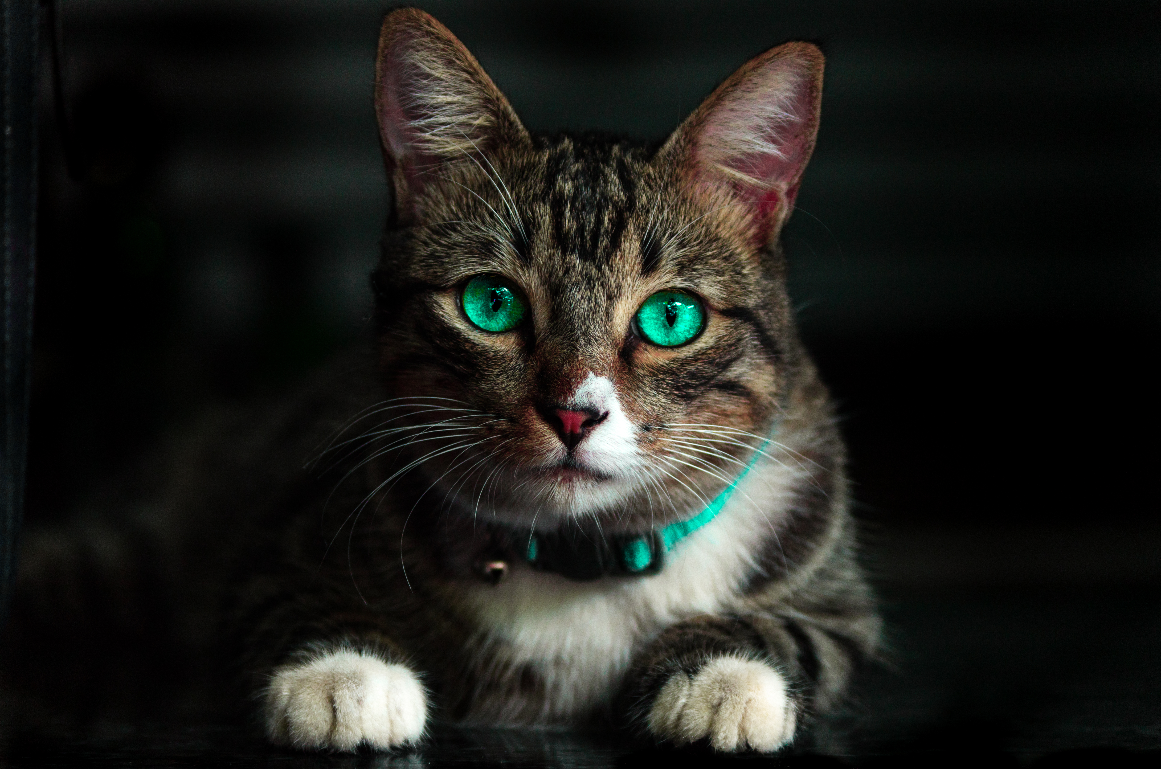 Cat · Pexels · Free Stock s