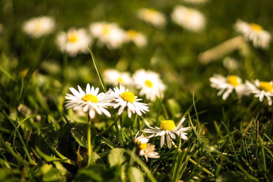 flowers, summer, grass