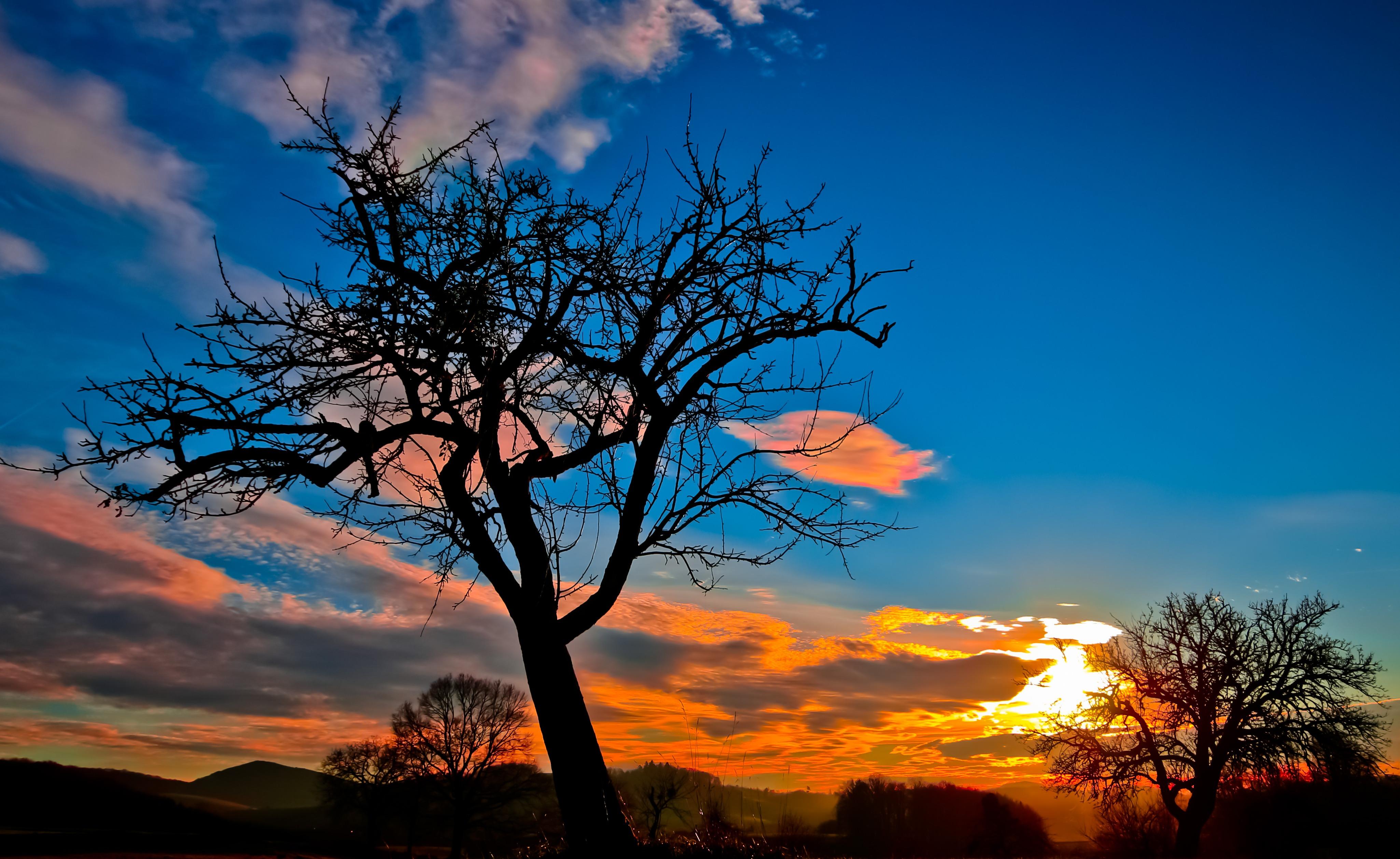 Free photo: Sky, Clouds, Sunset, Tree, Evening - Free Image on ...