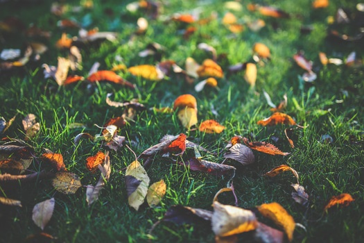 Free stock photo of leaves, autumn, fall