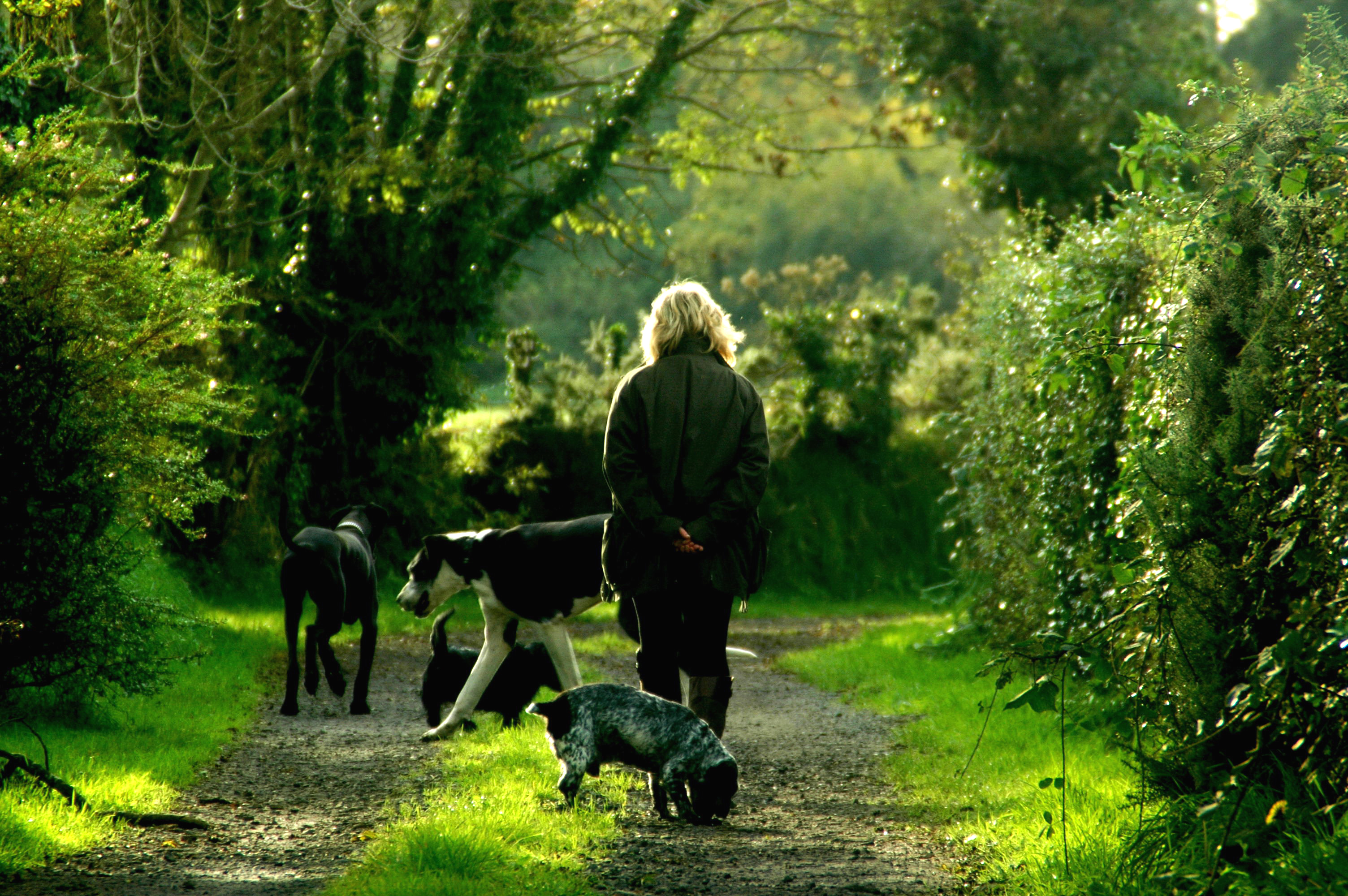 Image result for images of walking dogs in nature
