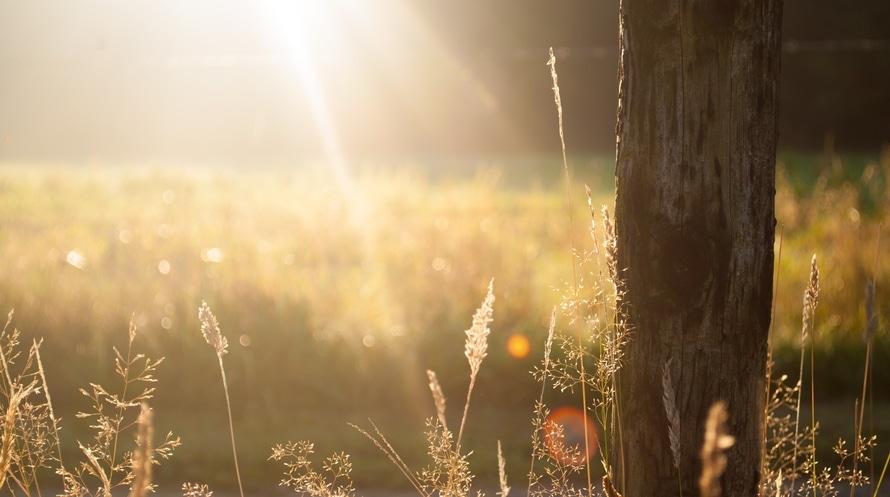 field, summer, sun