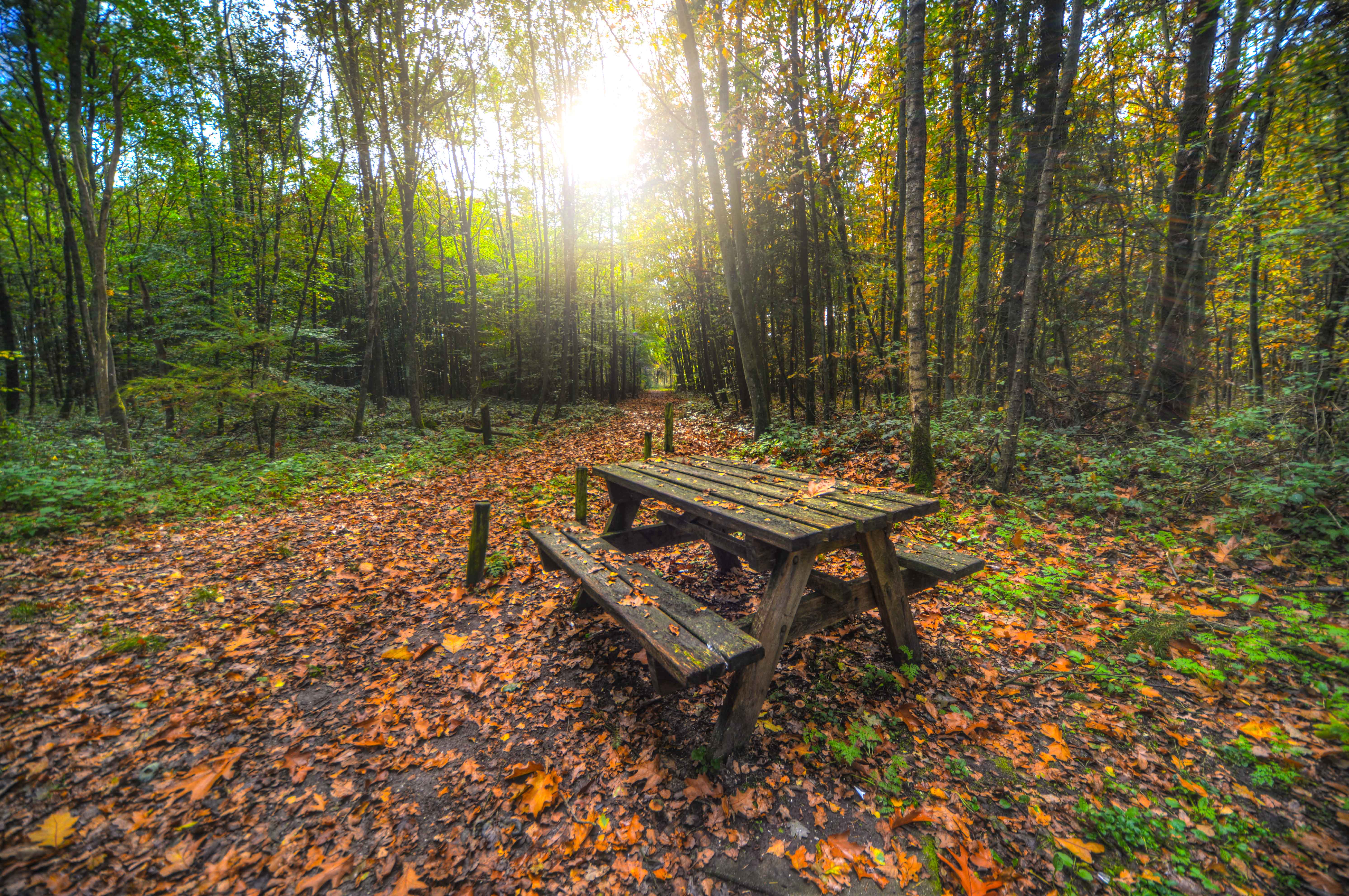 Brown Wooden Table With Bench Near Green Trees 183 Free