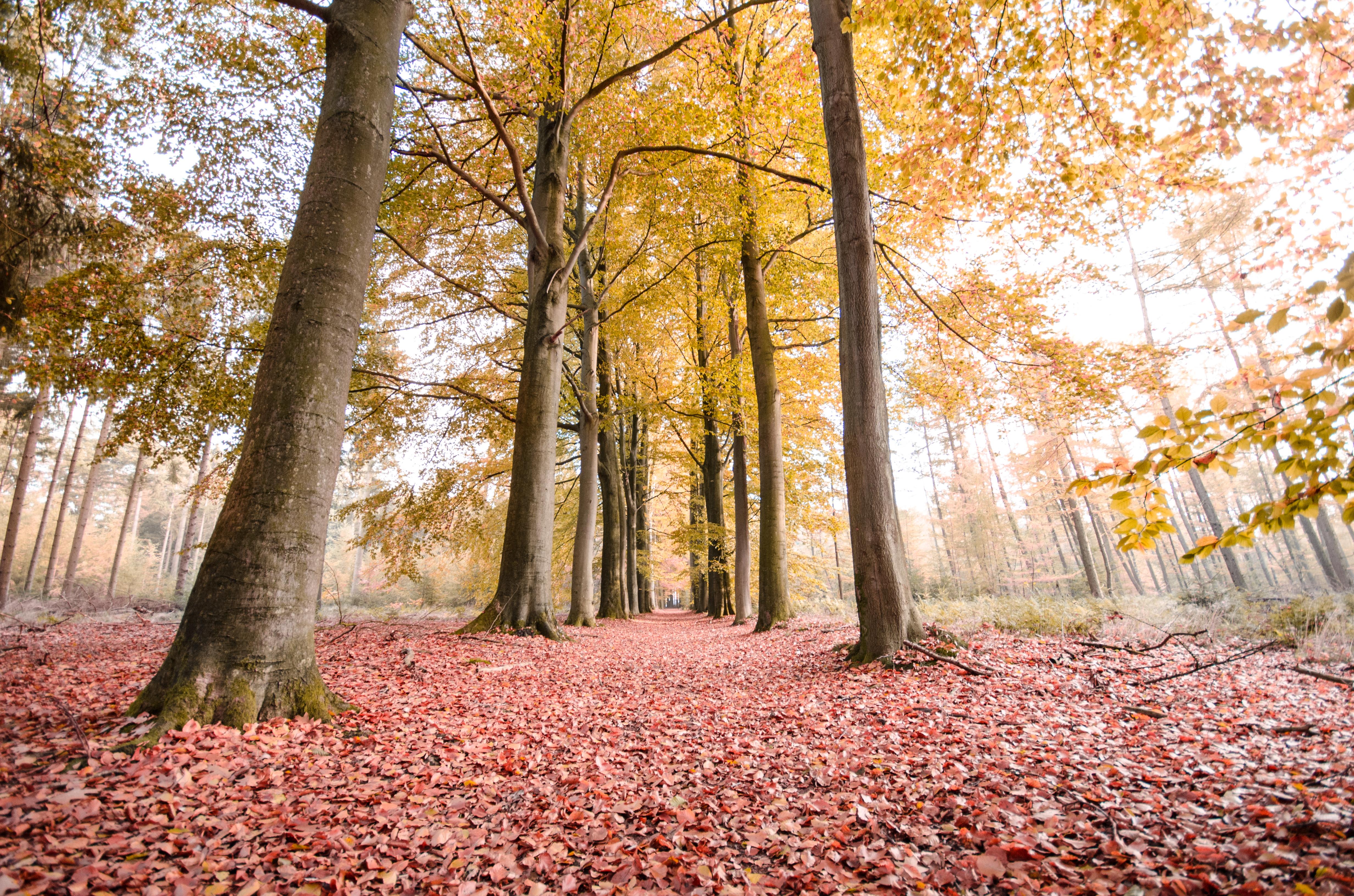 forest-autumn-trees-lane-630773.jpeg (4928×3264)