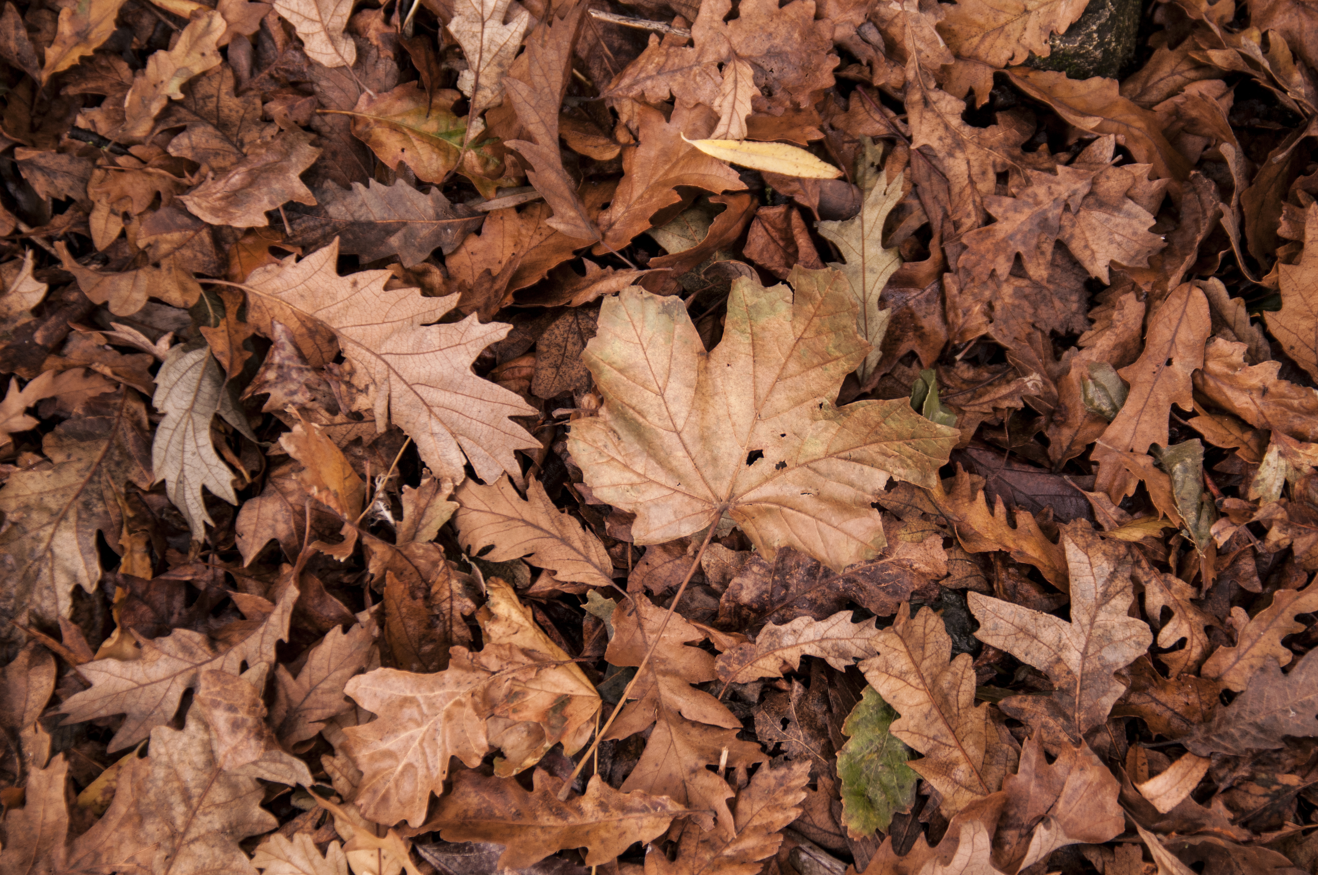 Image result for dry leaves