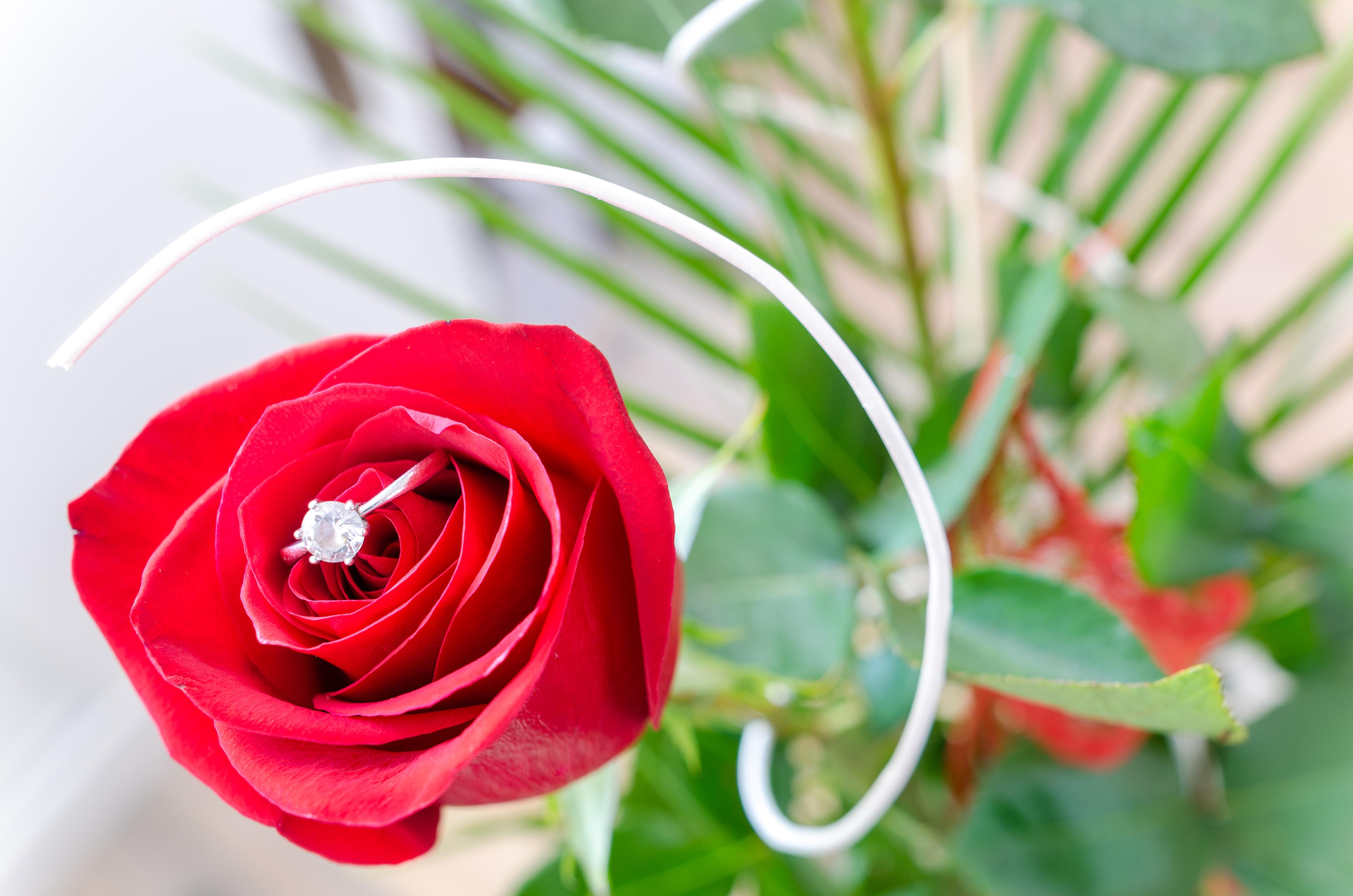 flower-rose-macro-nature-633859.jpeg (4928×3264)
