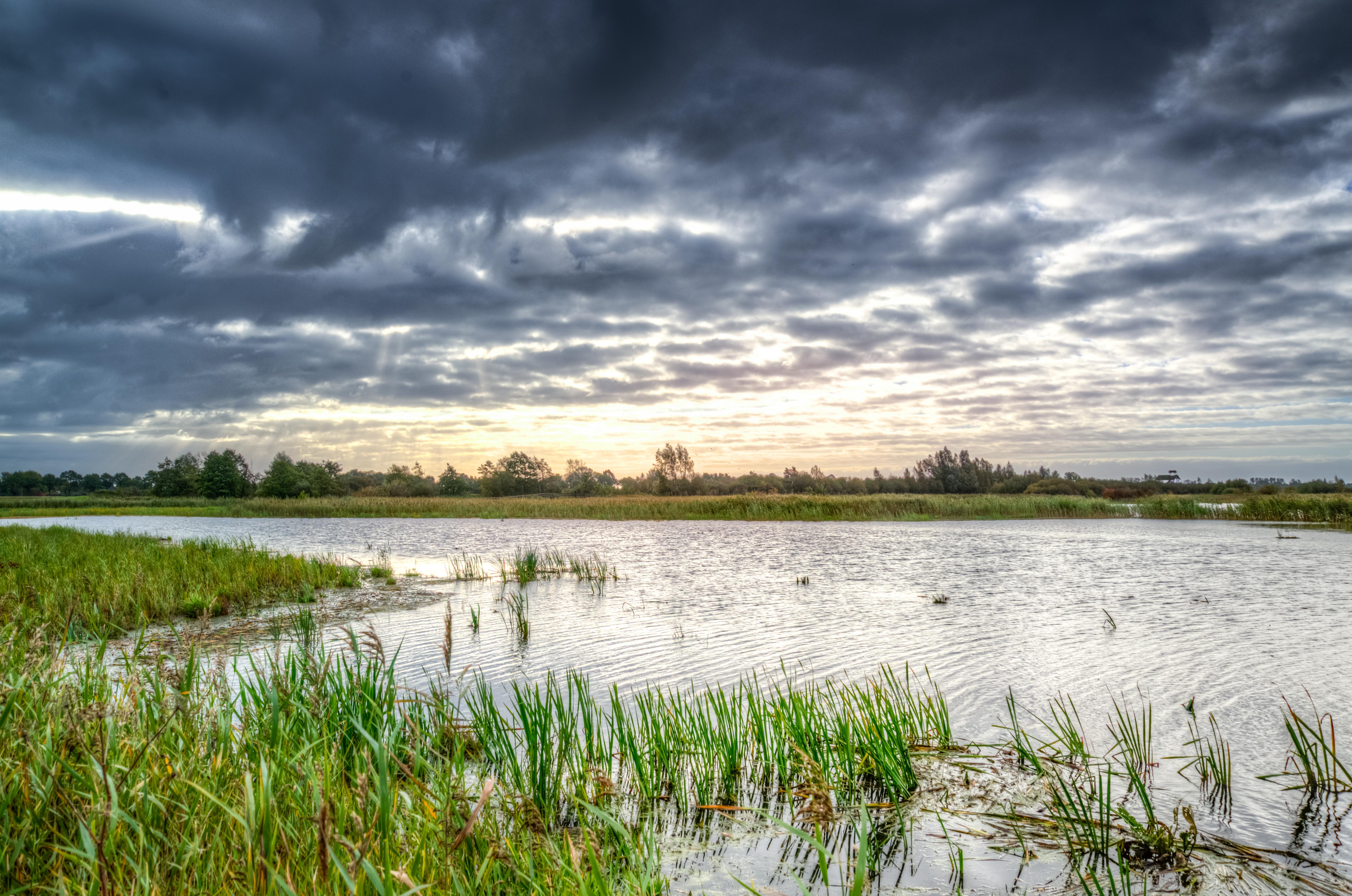 swamp-morning-water-reflection-633888.jpeg (5765×3823)