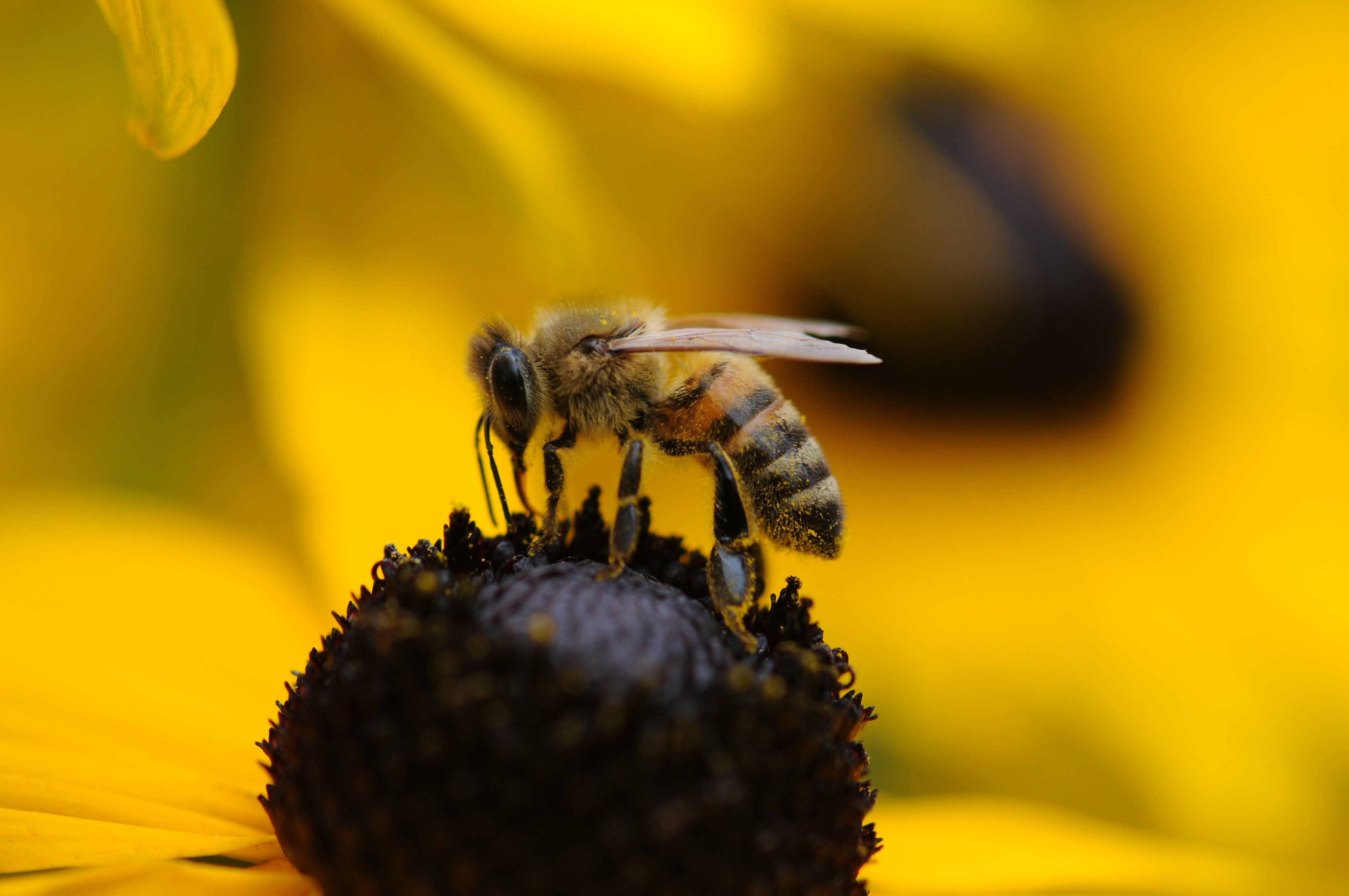 Tilt Shift Lens Photography Of Yellow And Black Bee Free Stock Photo