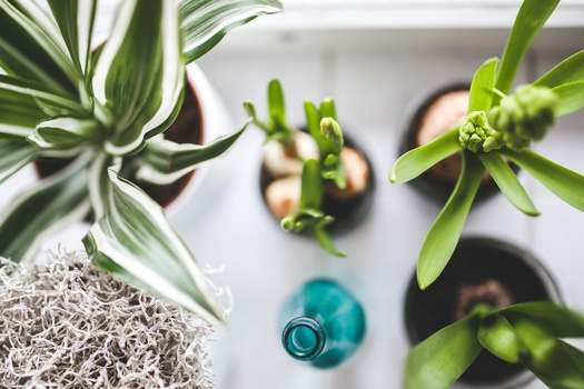 Free stock photo of plants, home