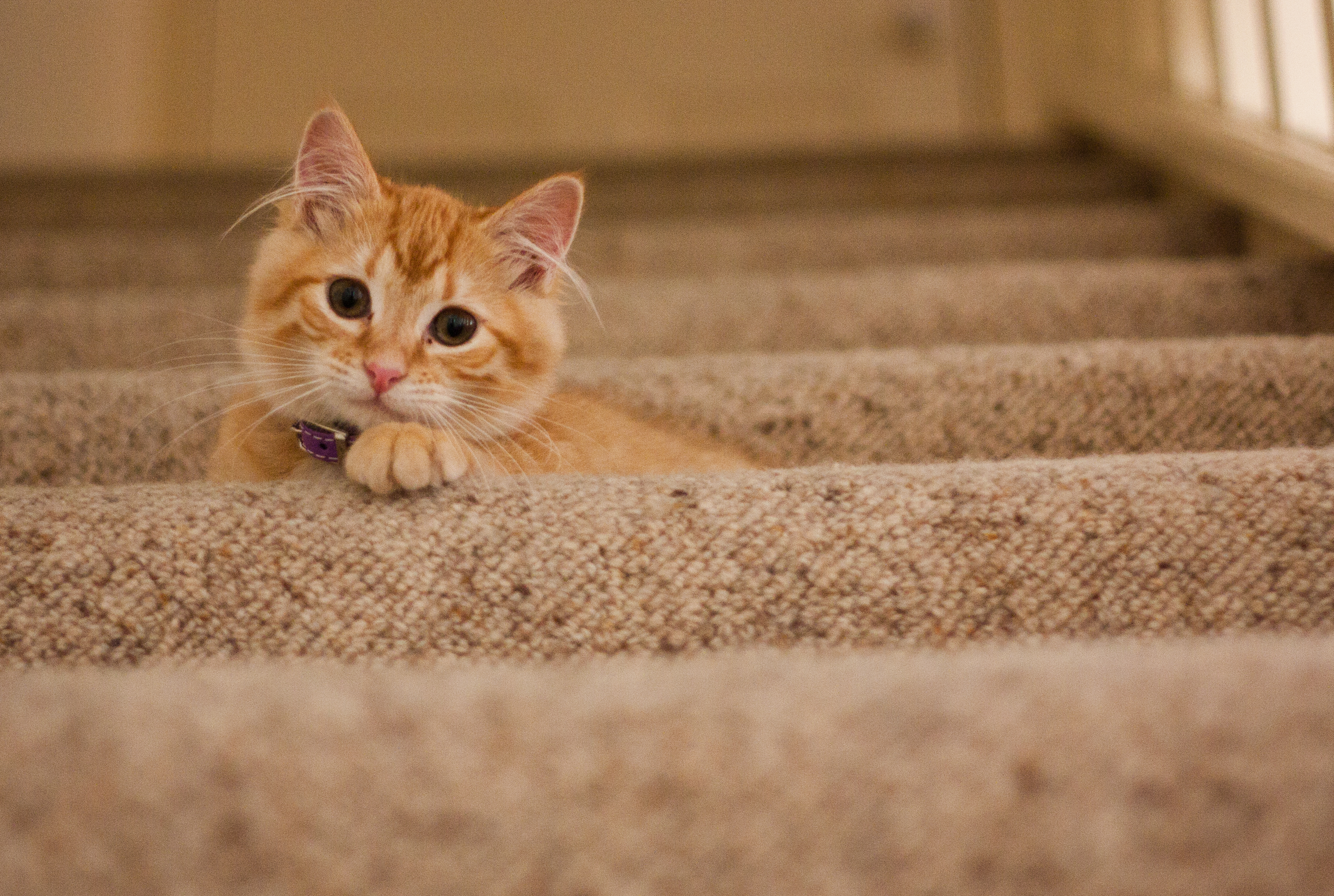 Orange Tabby Cat on Grey Staircase · Free Stock