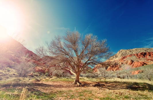 Free stock photo of sun, desert, dry, tree