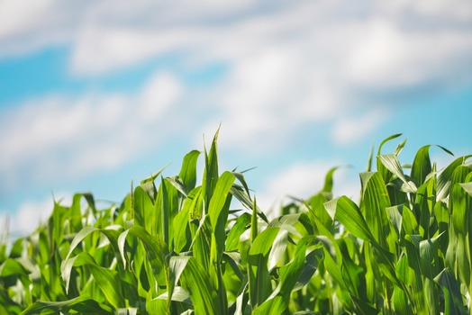 Free stock photo of field, agriculture, farm, cereals