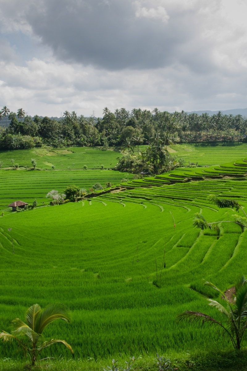 0 Apr Car >> Free stock photo of agriculture, asia, bali