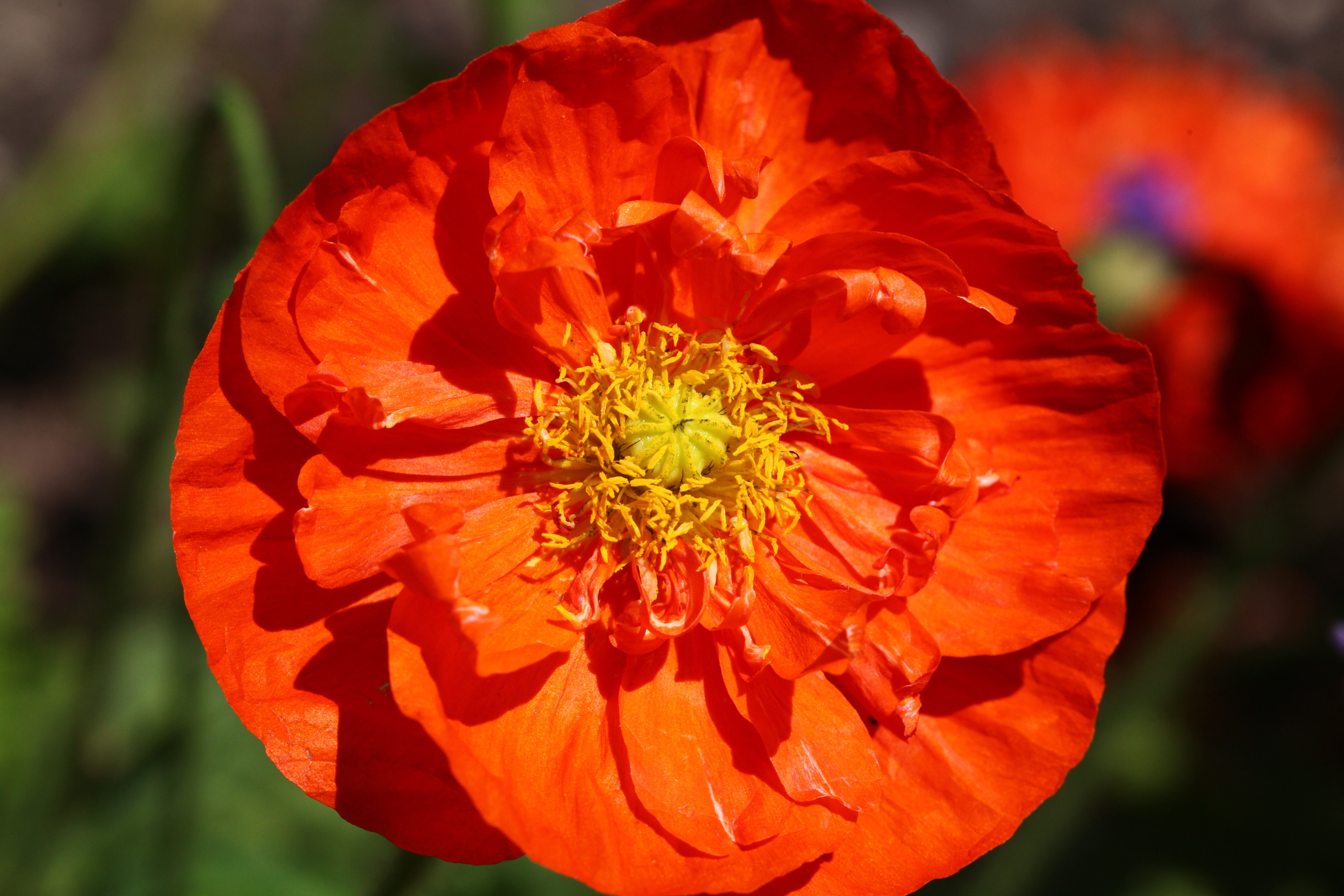 orange flower with yellow petals free stock photo