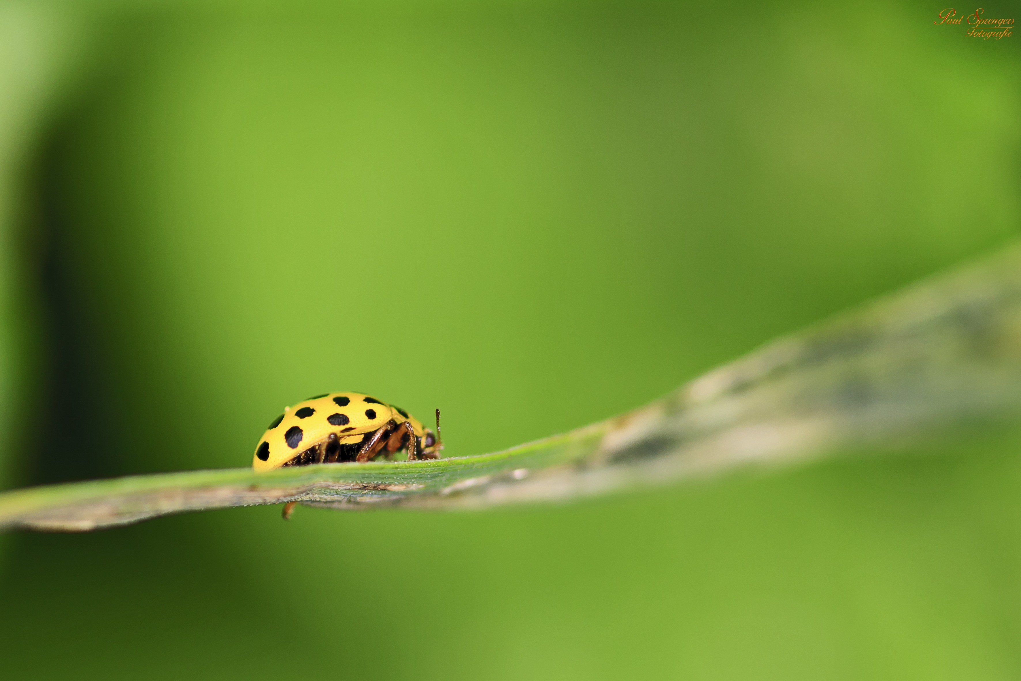 green lady bug on plant leaf free stock photo