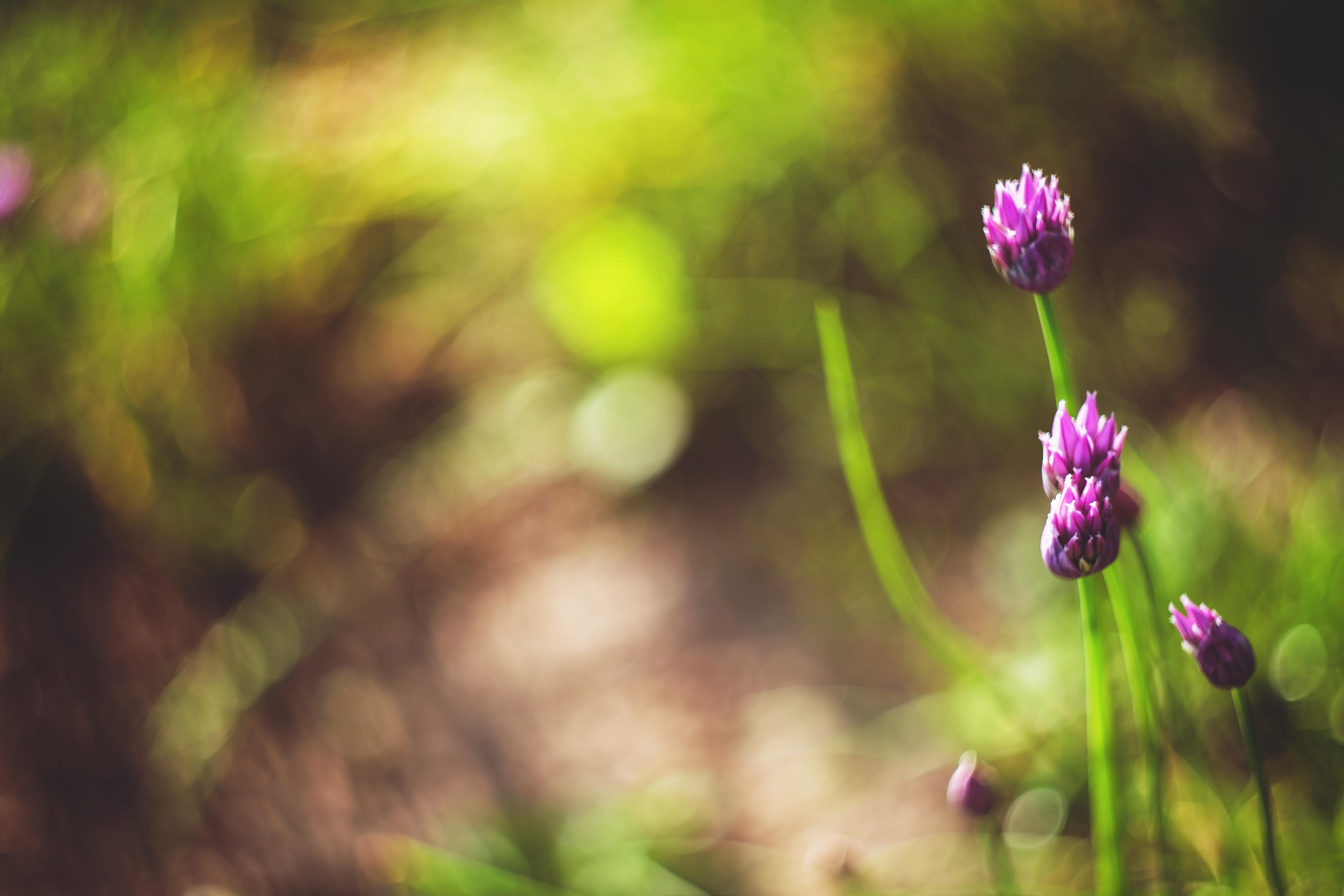 Vintage Photo Of A Beautiful Purple Flowers 4 Free Stock