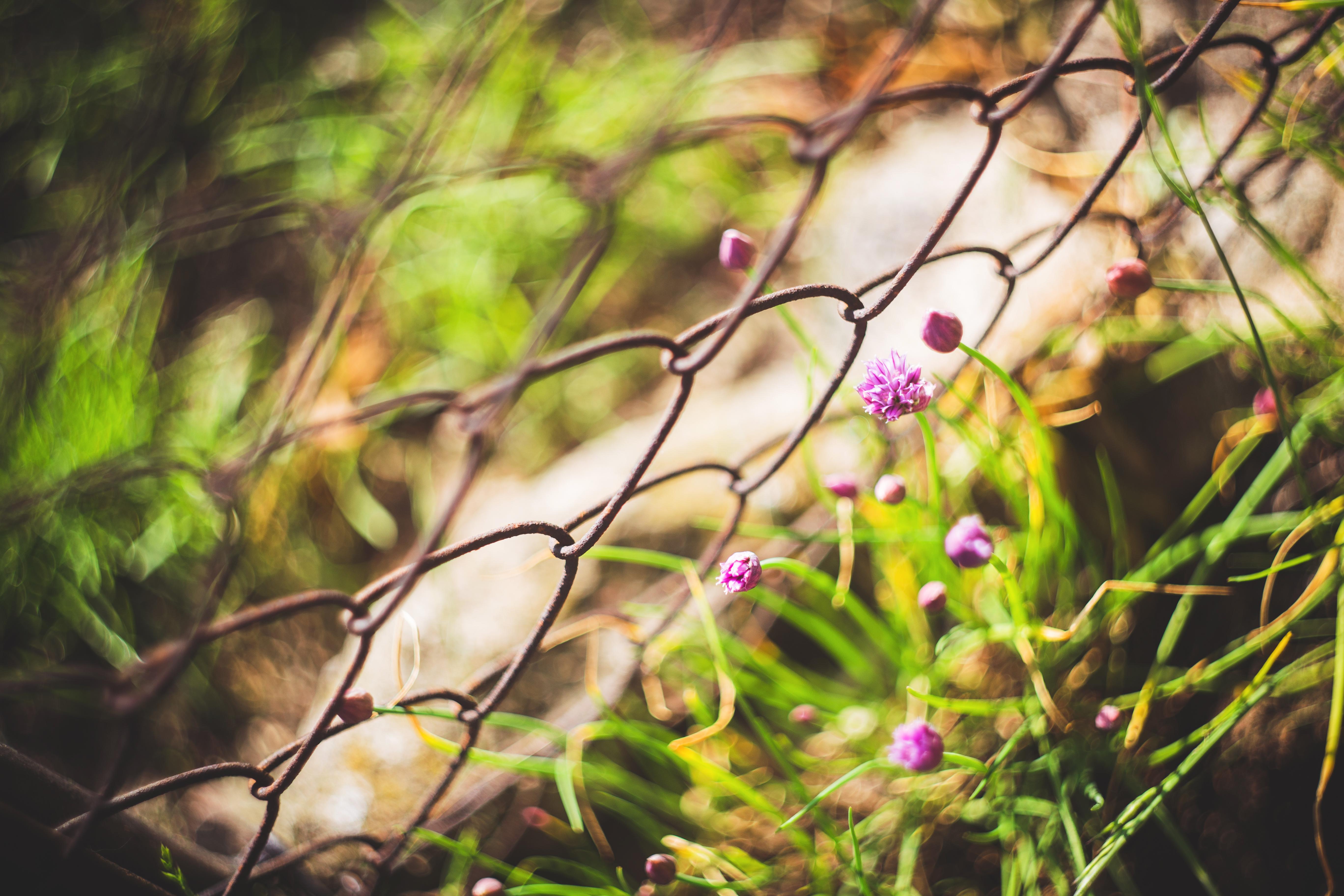 Vintage Photo Of A Beautiful Purple Flowers Free Stock