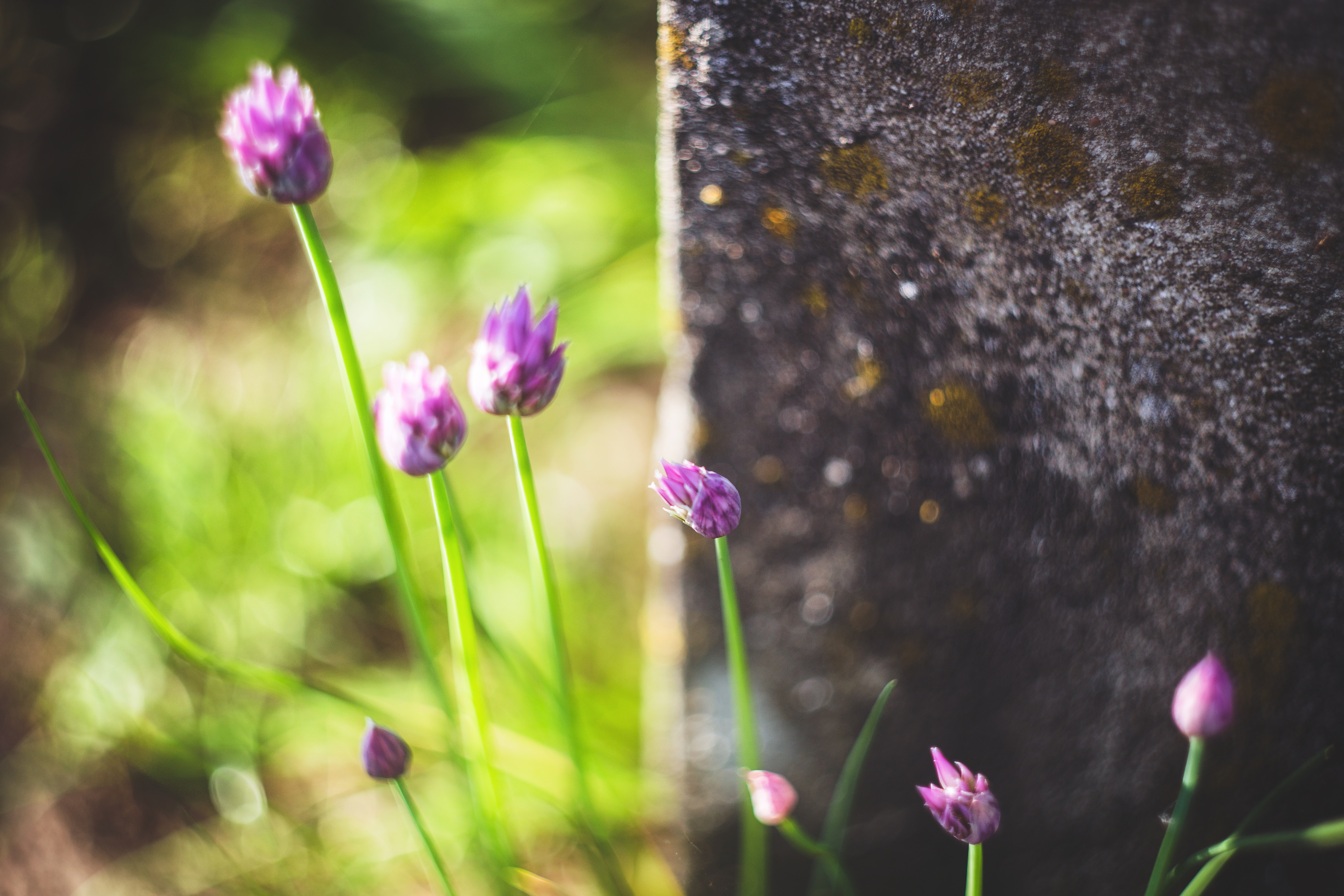 Vintage Photo Of A Beautiful Purple Flowers 2 Free Stock