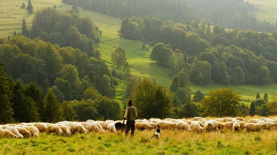 man, agriculture, farm