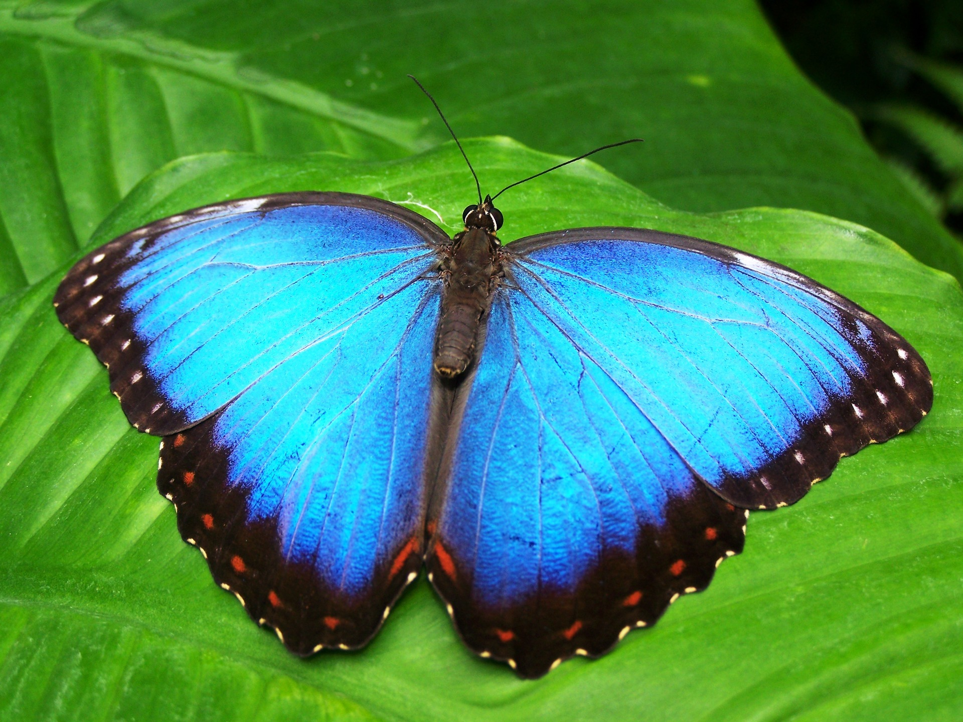 butterfly pictures pexels free stock photos