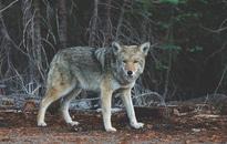 nature, animal, fur