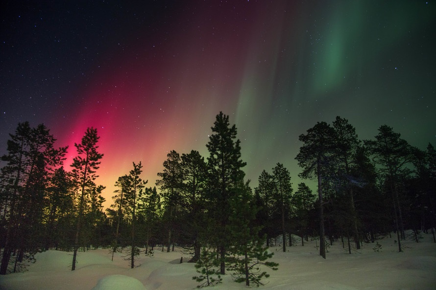 Forest in winter with snow and polar lights