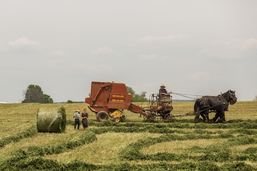 Free stock photo of people, field, working, agriculture