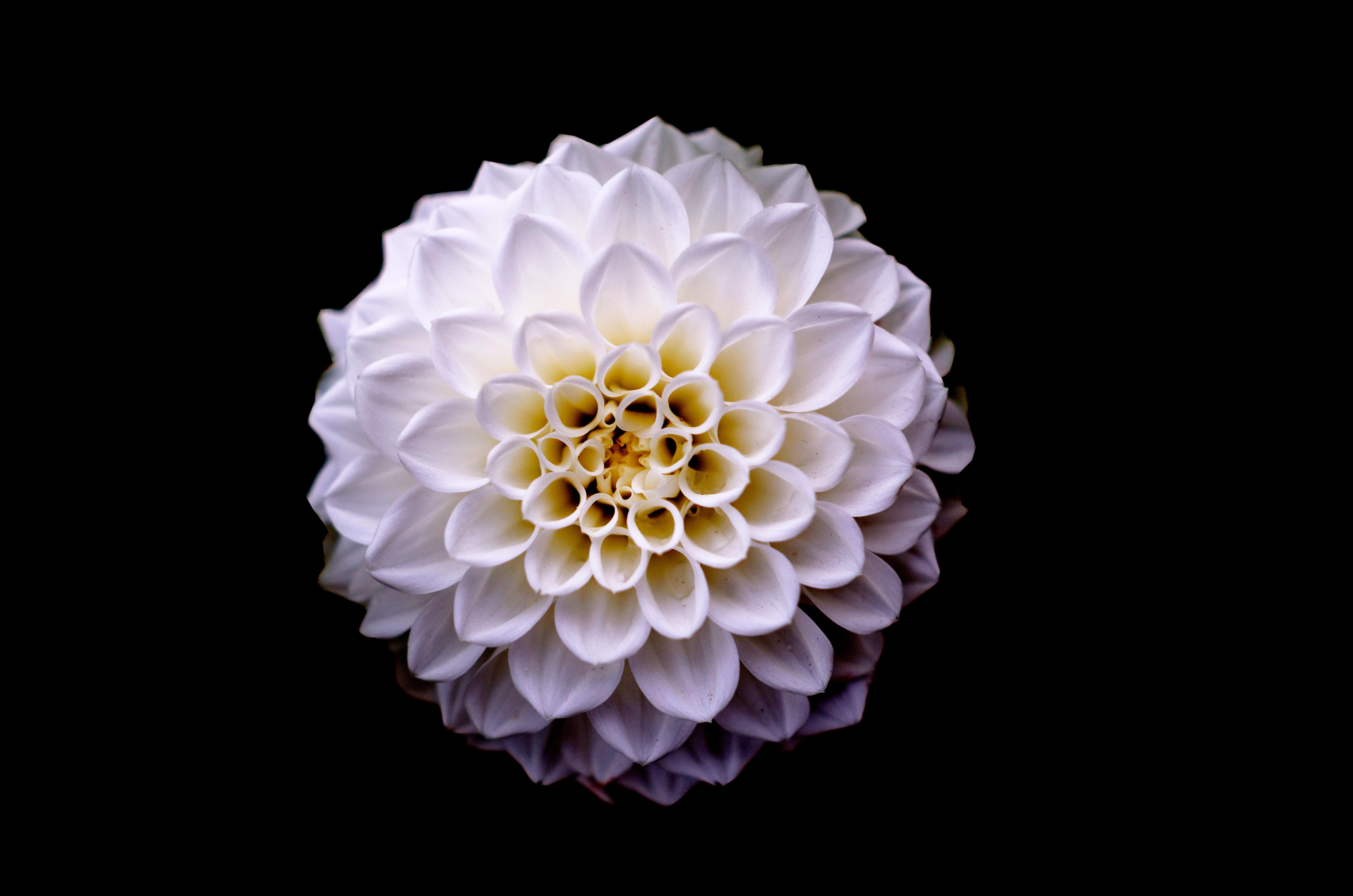 White and Yellow Flower Macro Photography