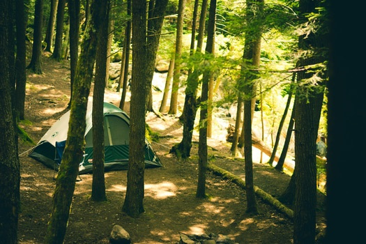 Free stock photo of forest, trees, adventure, camping